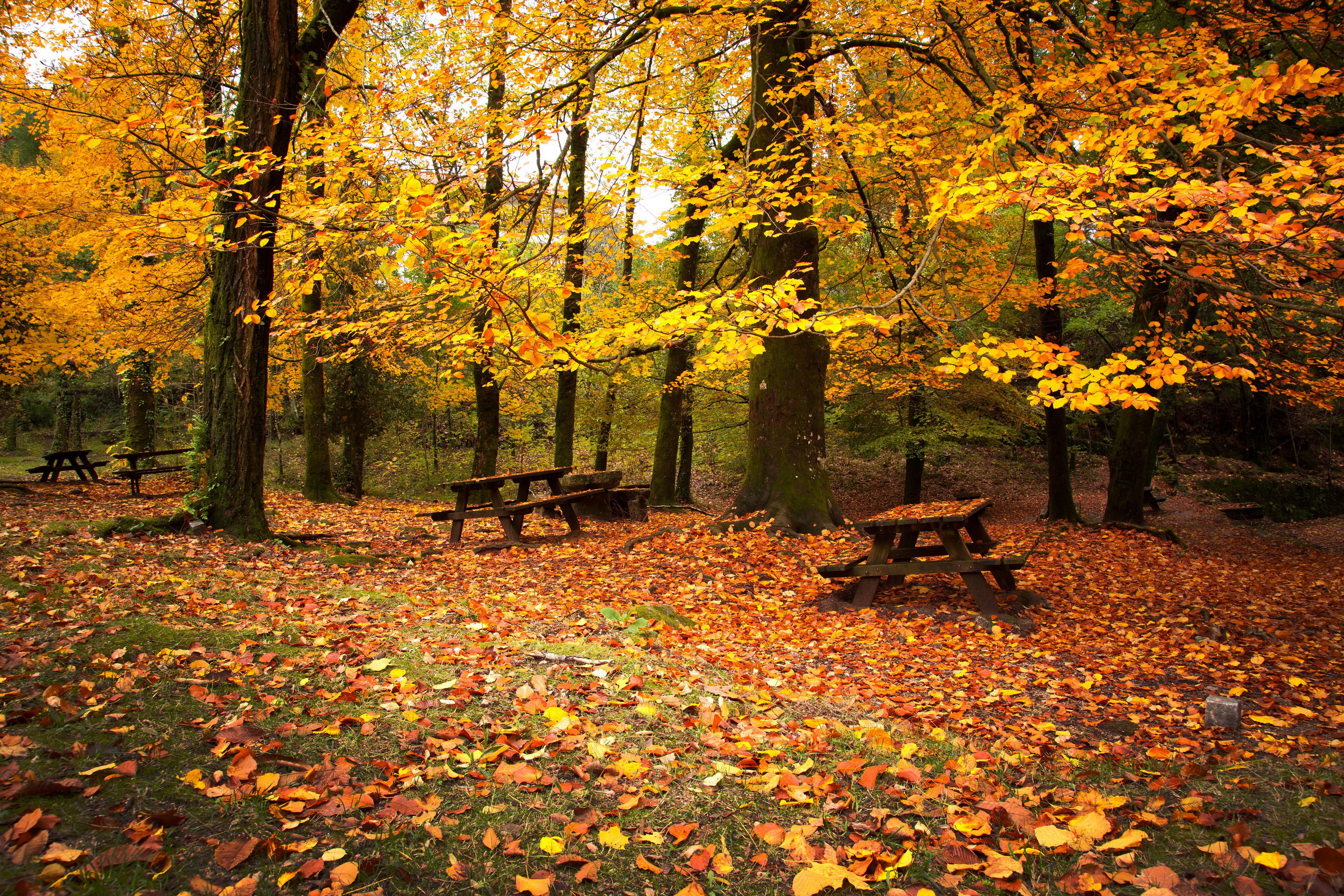 Осень листва лес без смс