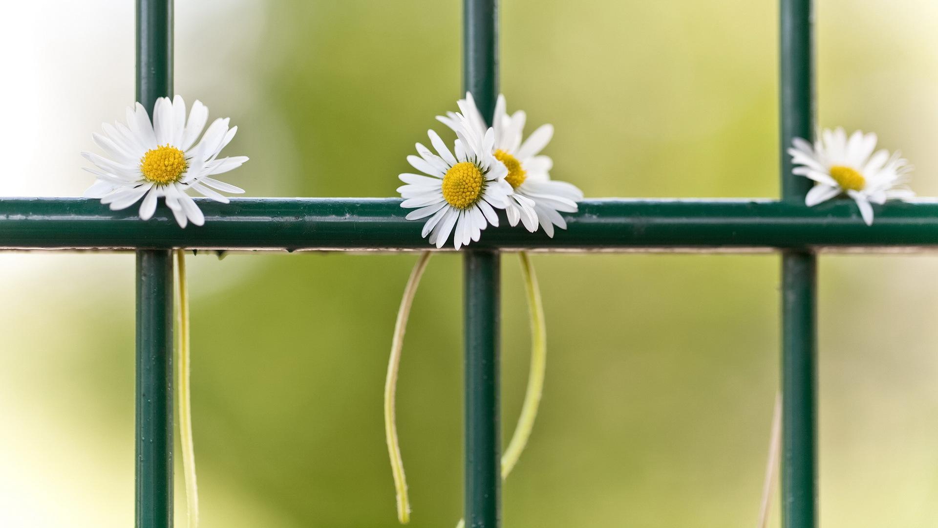 Забор цветы в хорошем качестве