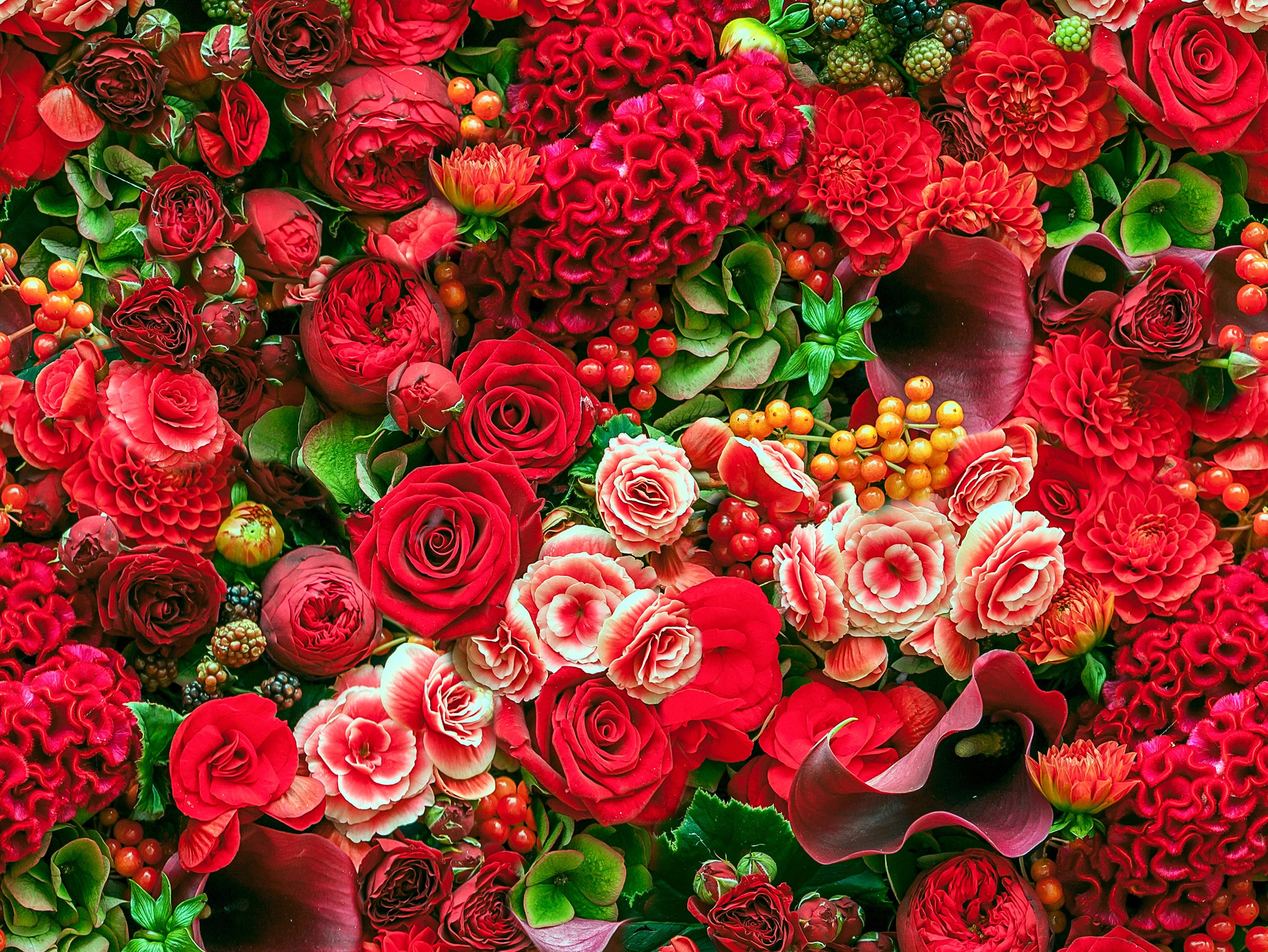 Коллекции луковиц цветов фото отзывы Купить коллекцию