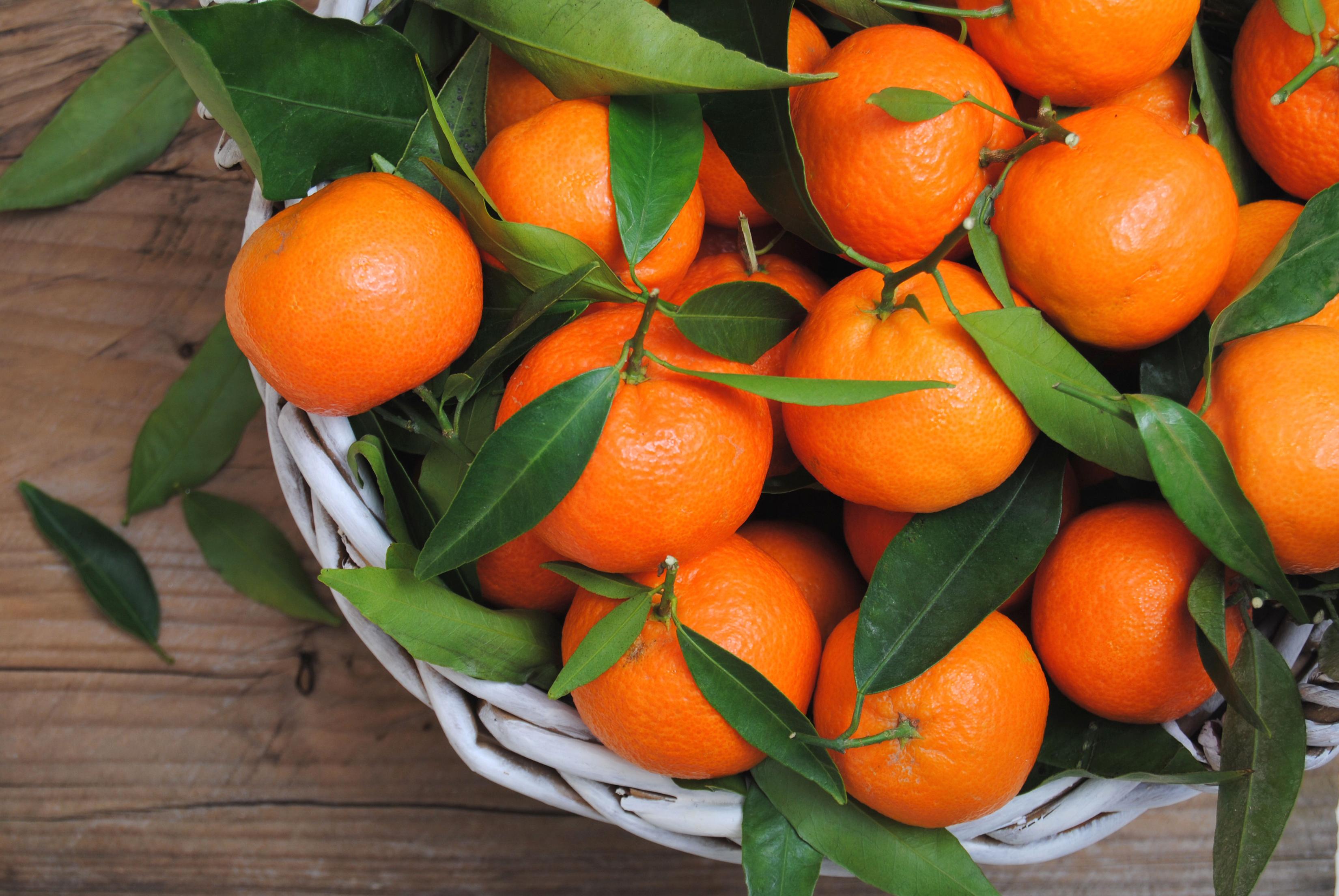Картинки Листья Мандарины Еда вблизи Цитрусовые лист Листва Пища Продукты питания Крупным планом