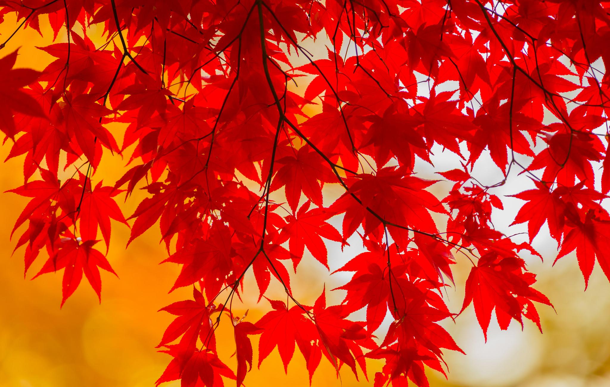 Осень красные листья скачать