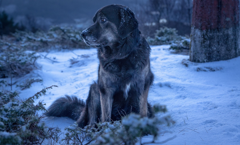 собака снег морда одиночество бесплатно