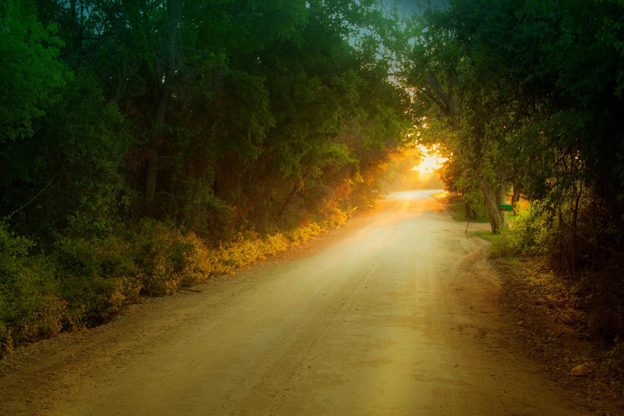 закат, девушка, лесная дорога скачать