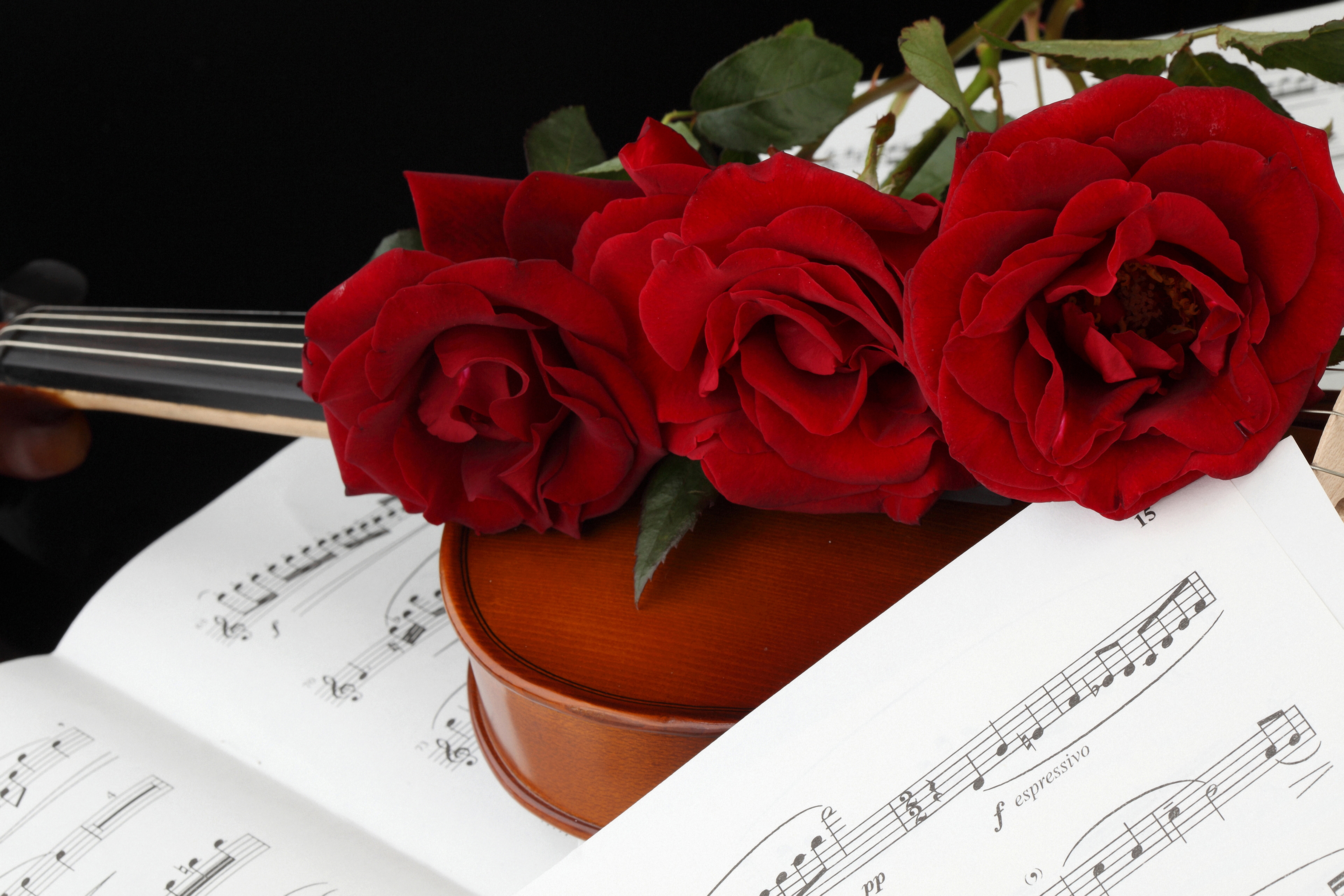 Фотографии Ноты Розы бордовые цветок Трое 3 4500x3000 роза Бордовый бордовая темно красный Цветы три втроем