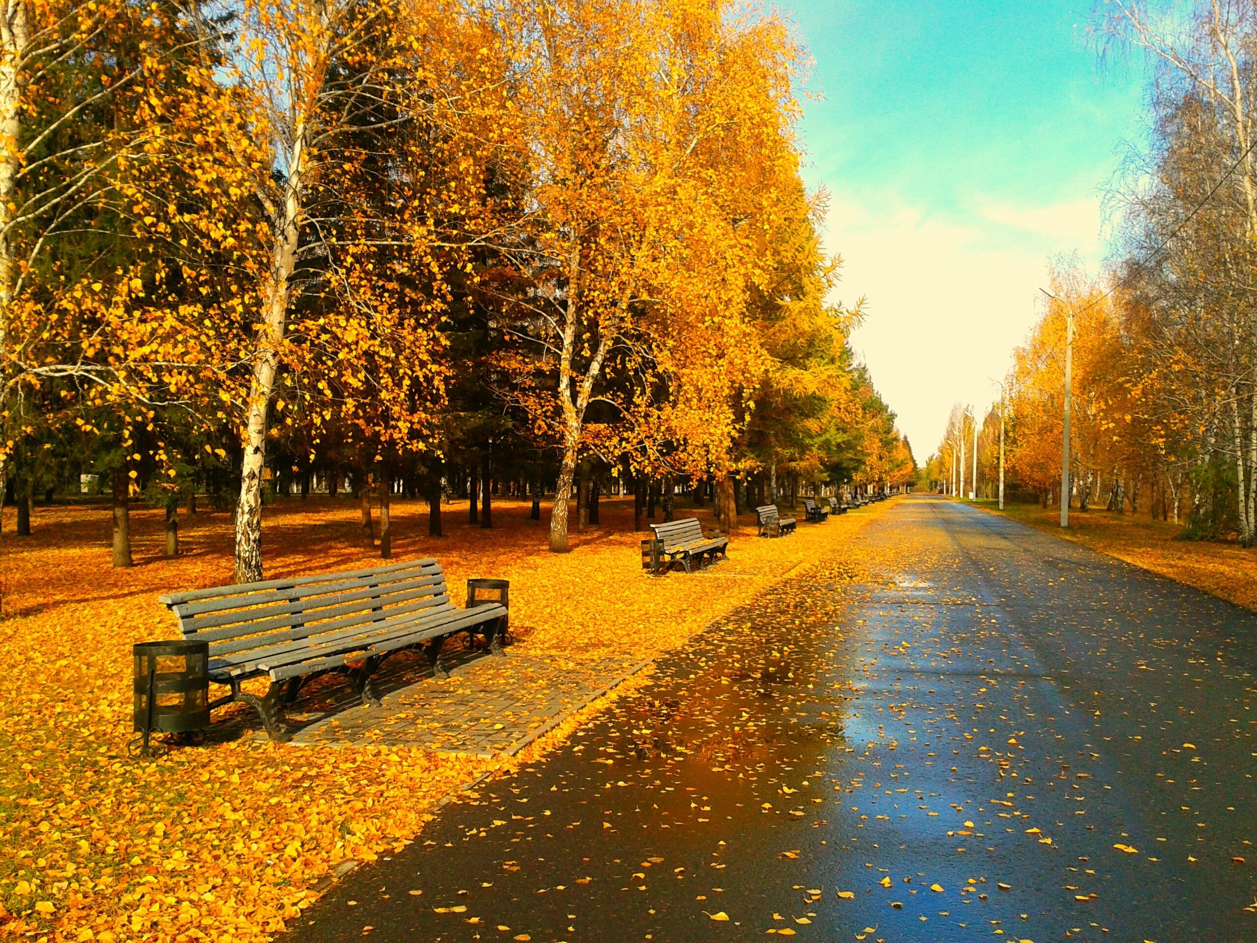 Осенняя природа без смс