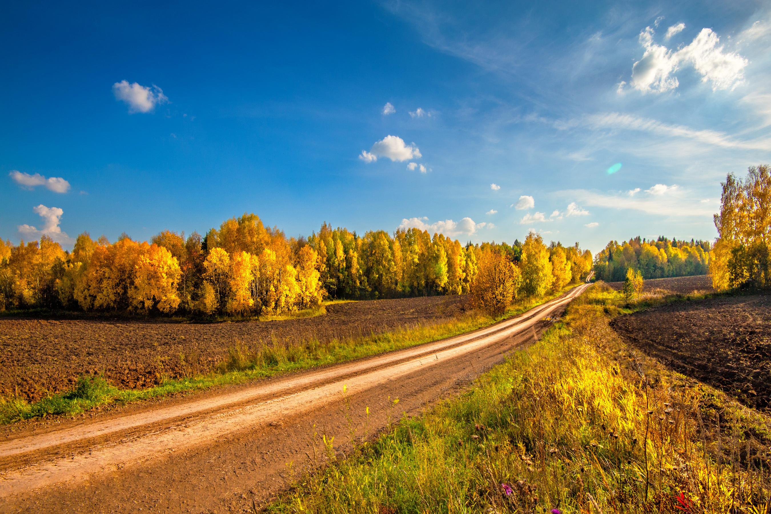 дорога осенний лес небо без смс