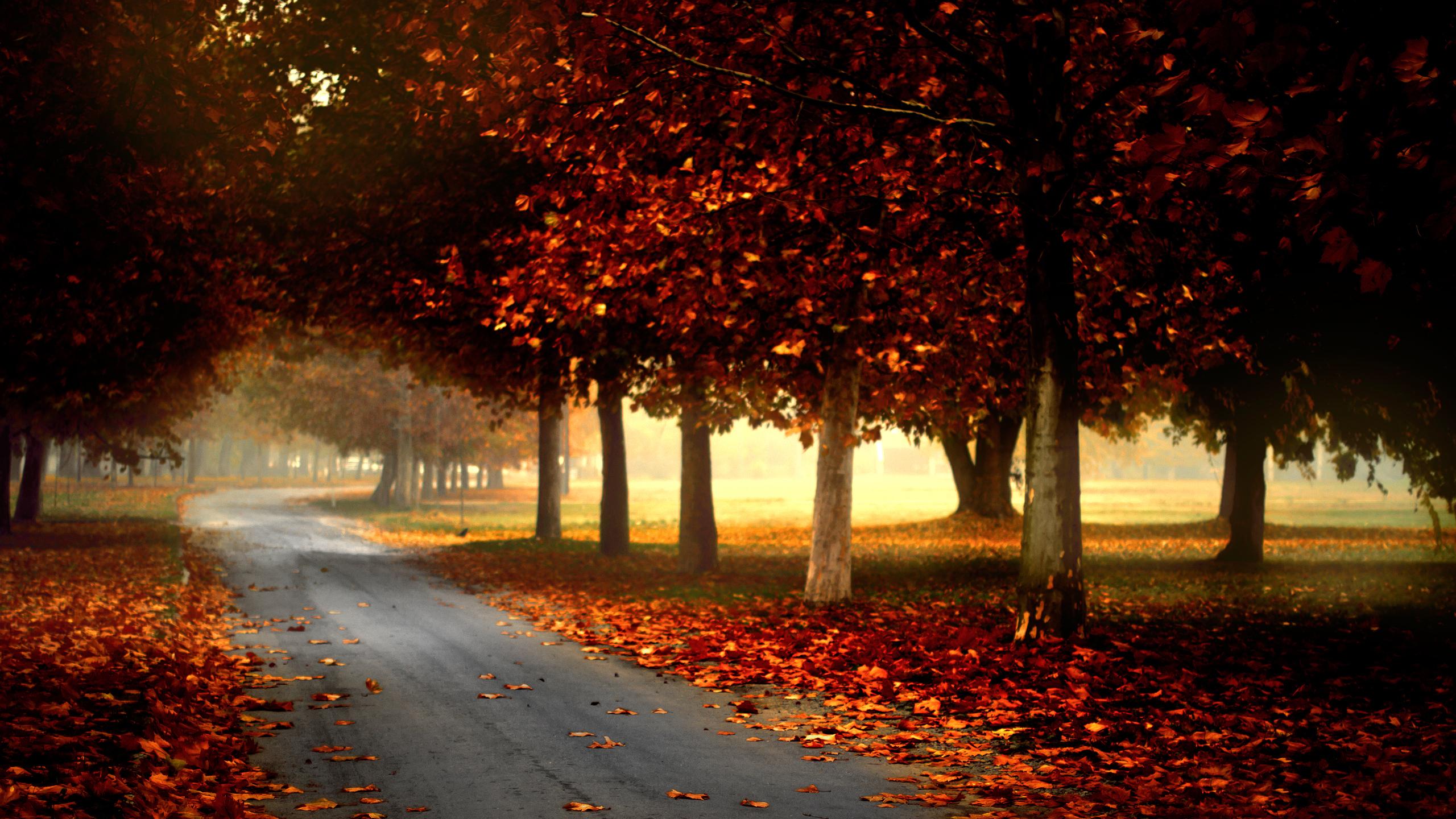 пара закат парк осень загрузить