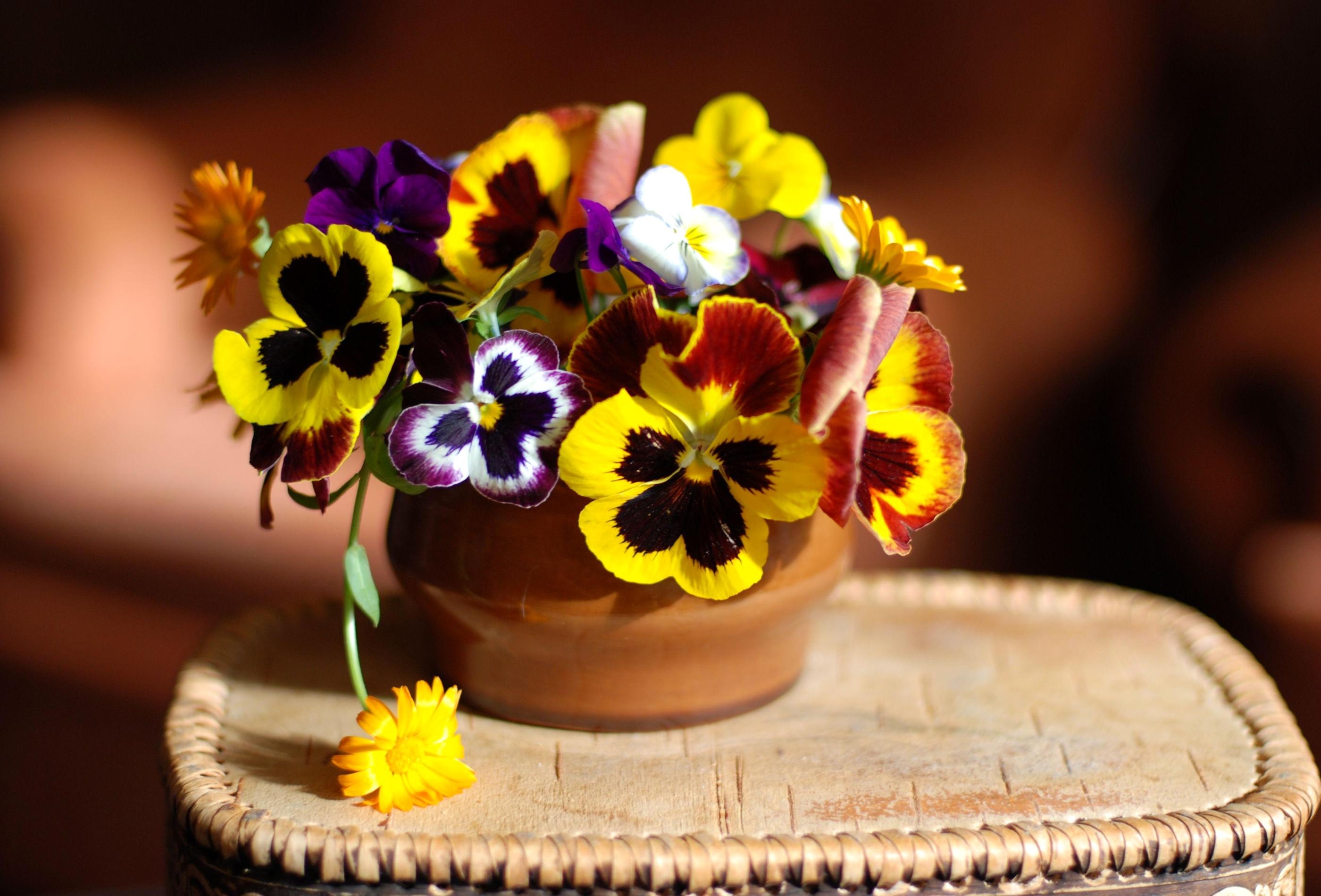 Цветок в горшке скачать