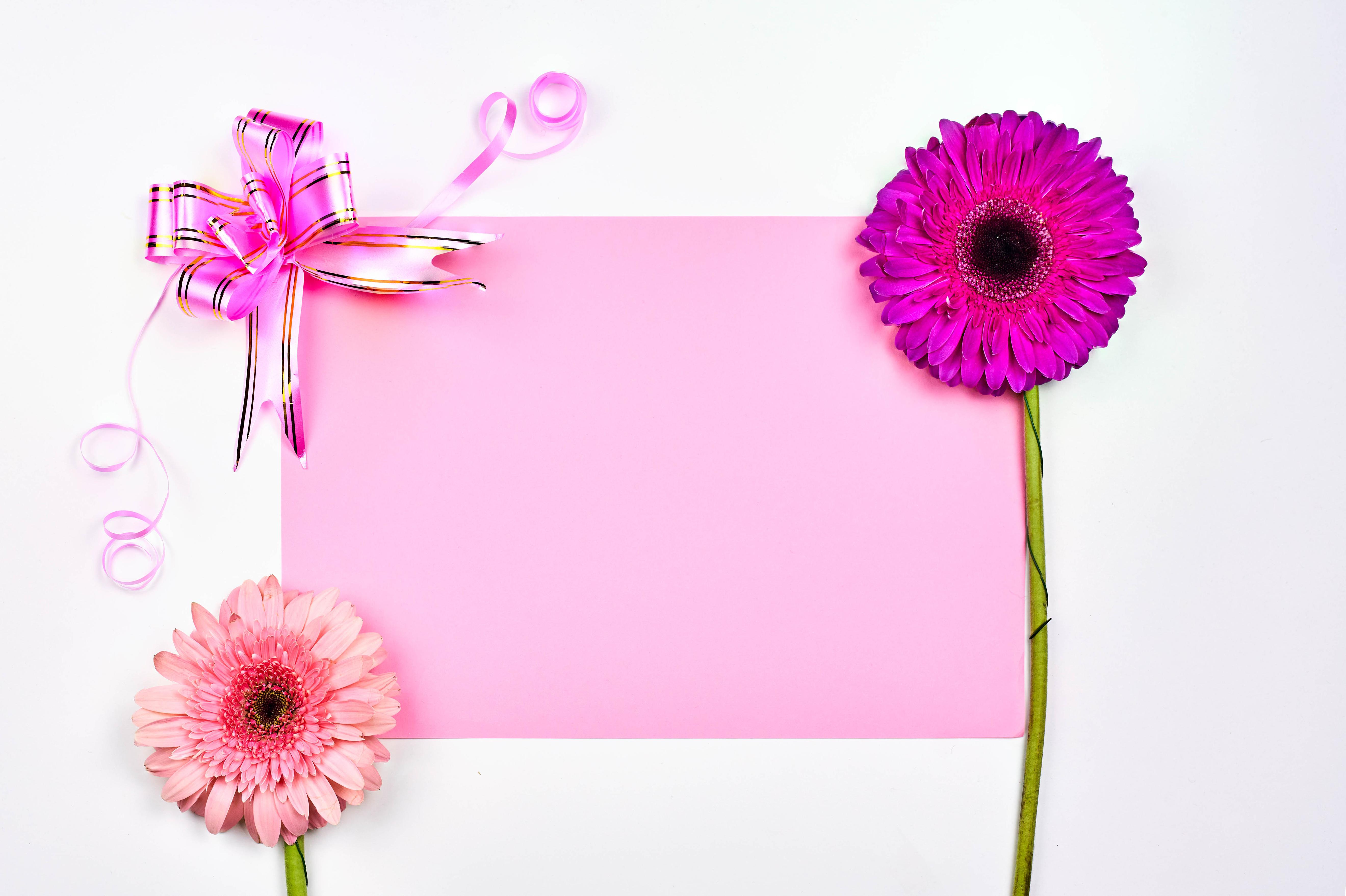 Фотографии День всех влюблённых Лист бумаги Герберы Цветы Бантик Шаблон поздравительной открытки Белый фон 5280x3516 День святого Валентина гербера цветок бант бантики белом фоне белым фоном