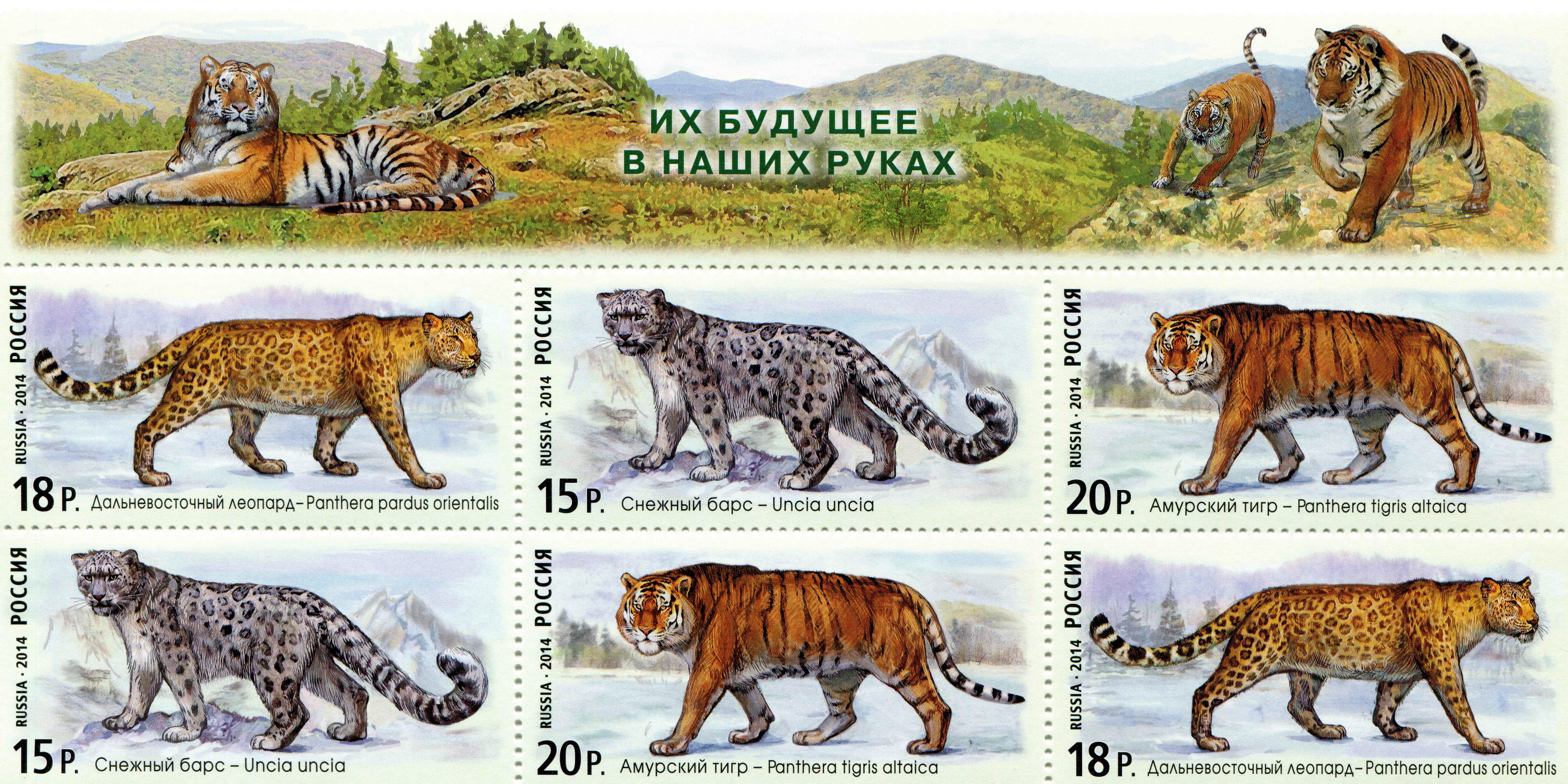 Фотография Тигры Барсы Леопарды Their future developments in our hands животное Рисованные 9164x4582 тигр Ирбис леопард Животные