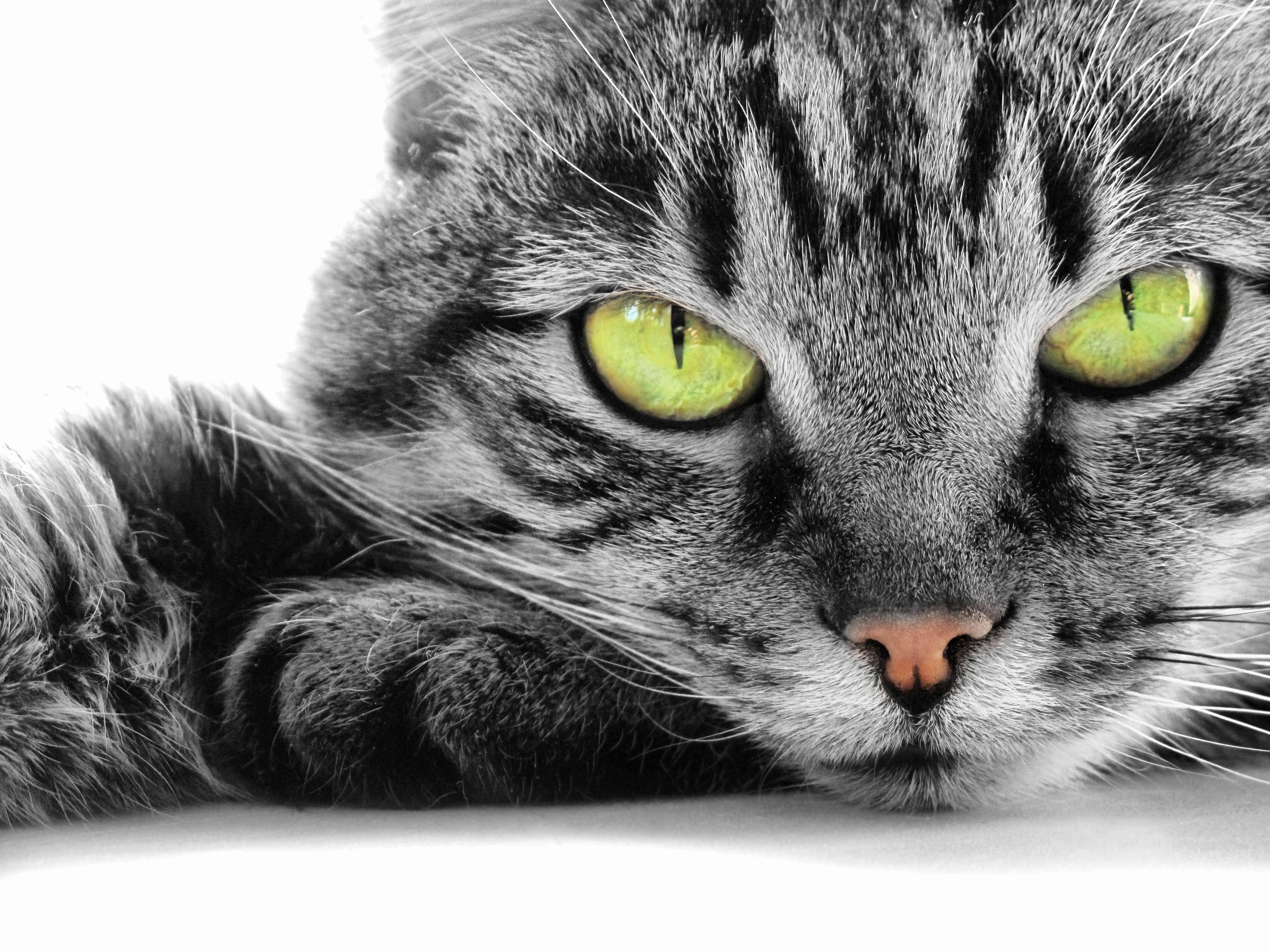 хитрый котенок без смс