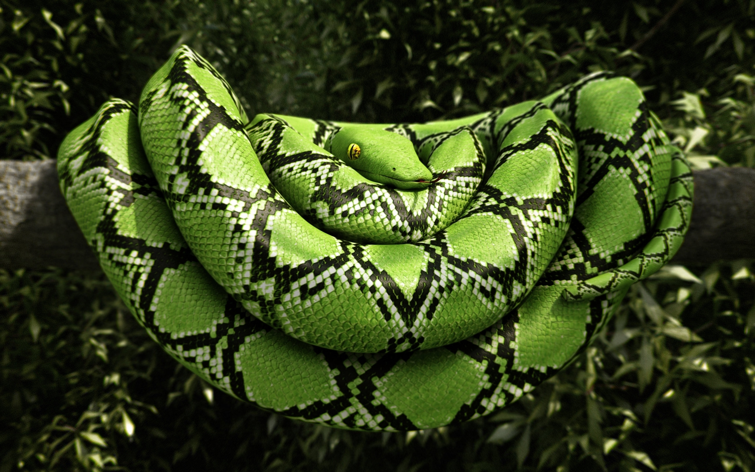 Green Tree Pythons Green Tree Pythons formerly known as Chondropython viridis are currently classified as Morelia viridis These unique pythons come from New