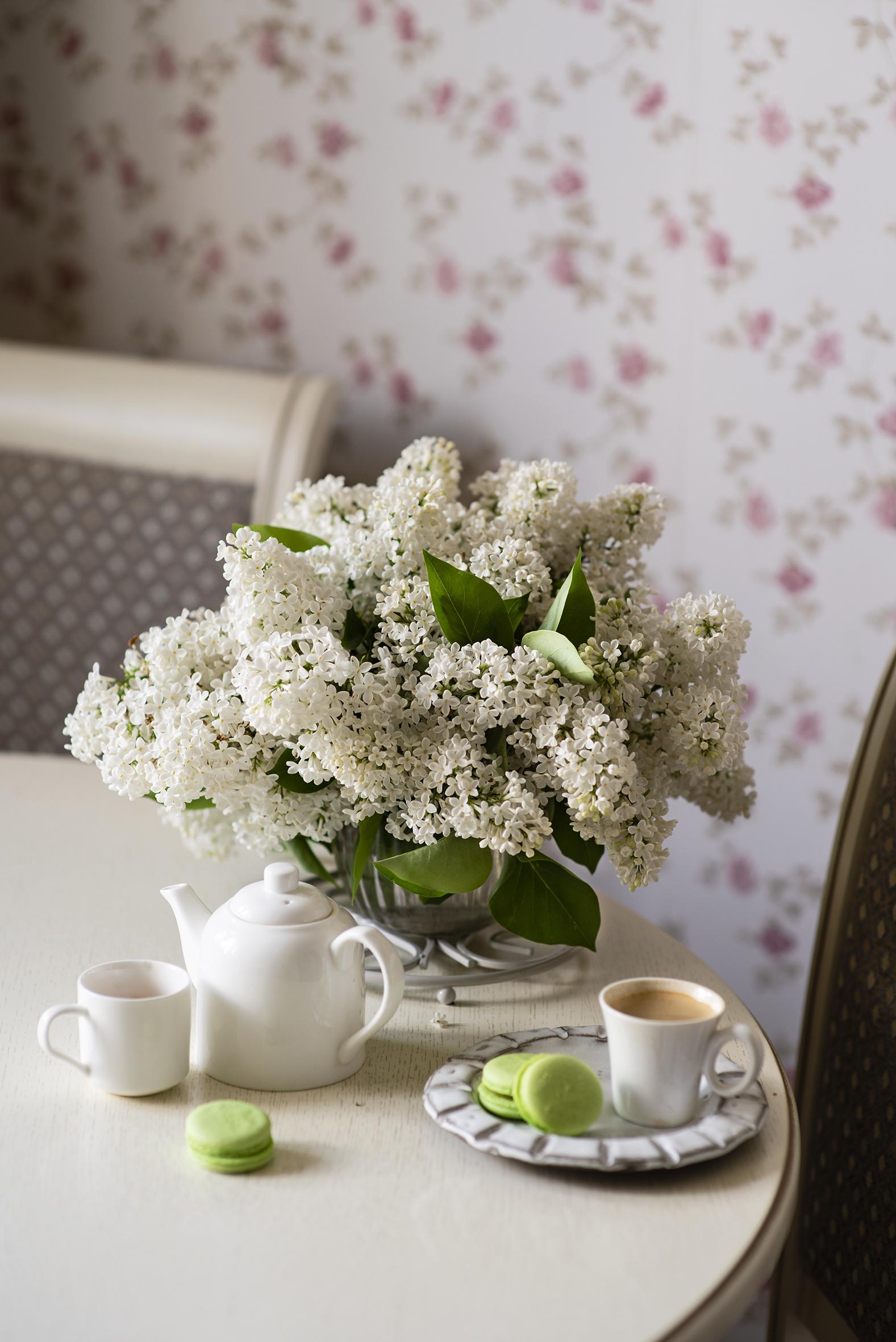 Обои для рабочего стола Макарон Кофе белых цветок Сирень чашке Продукты питания Натюрморт  для мобильного телефона Белый белые белая Цветы Еда Пища Чашка