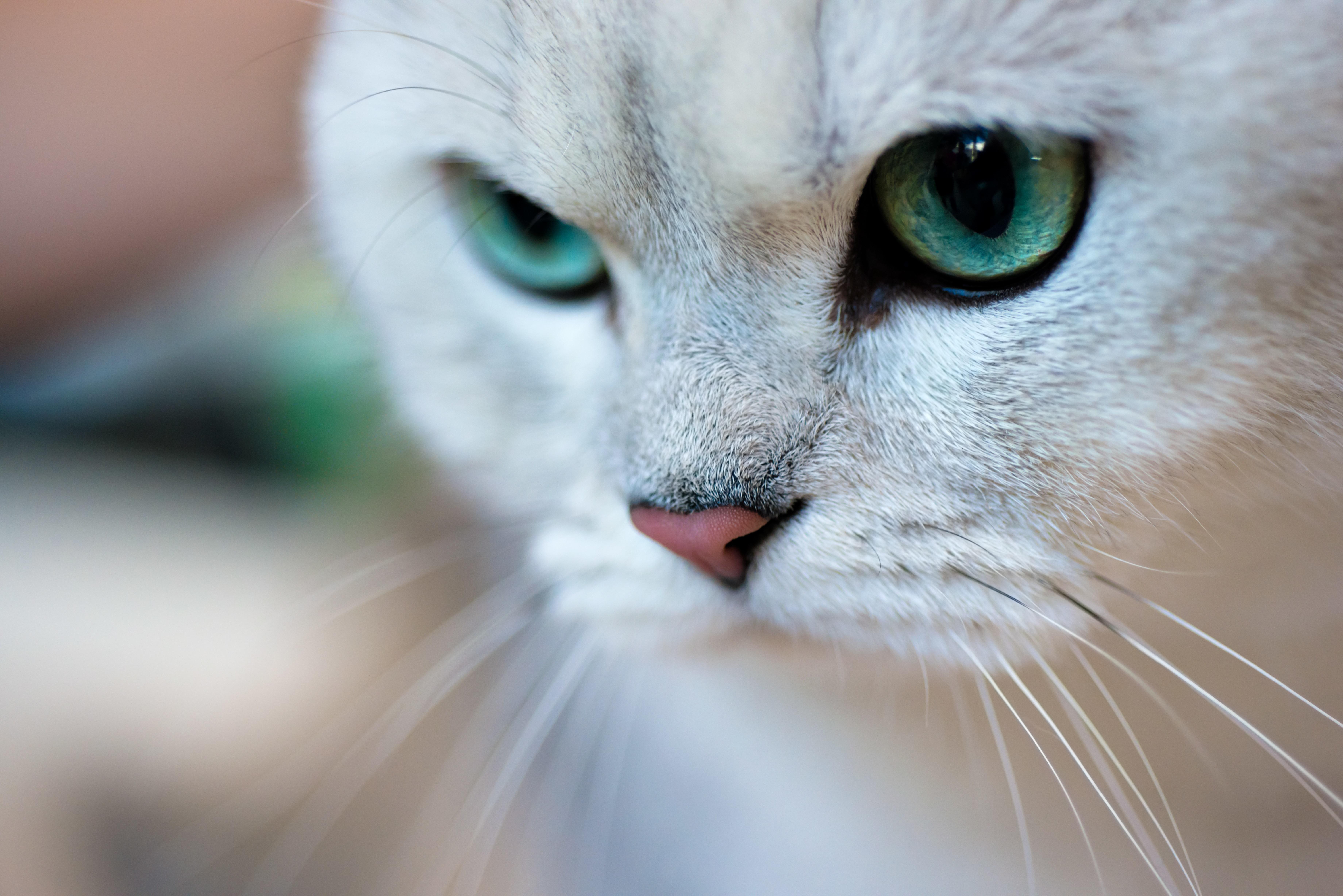Кошка зеленые глаза скачать