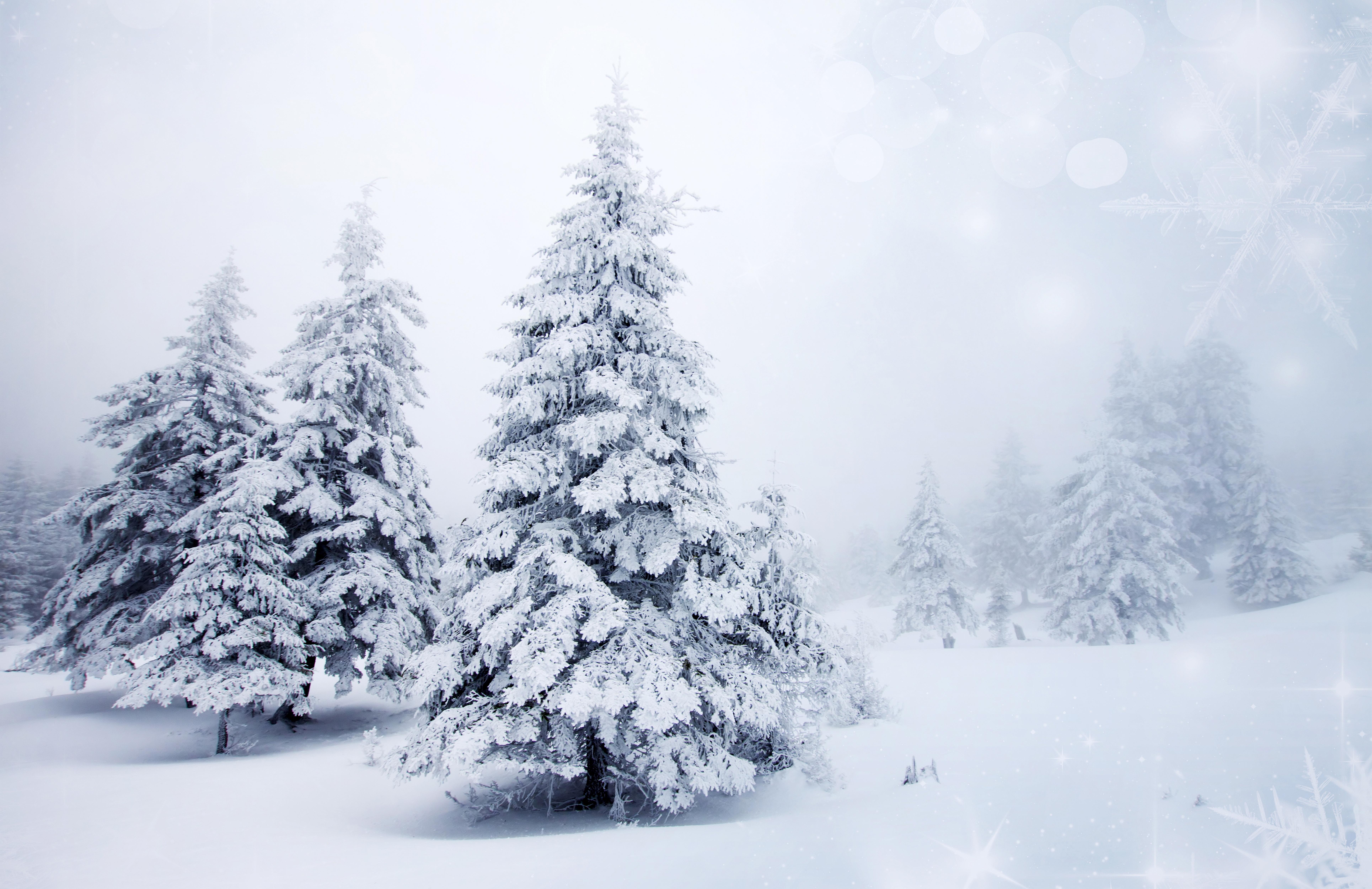 деревья природа ели снег зима без смс