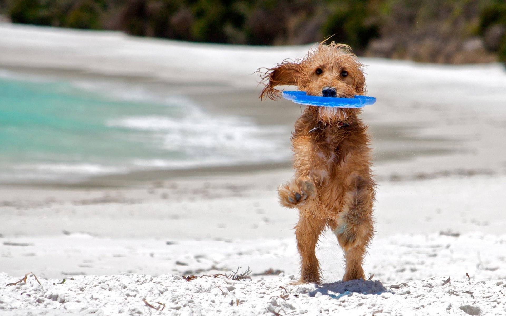 собака пляж песок море спасательный круг бесплатно