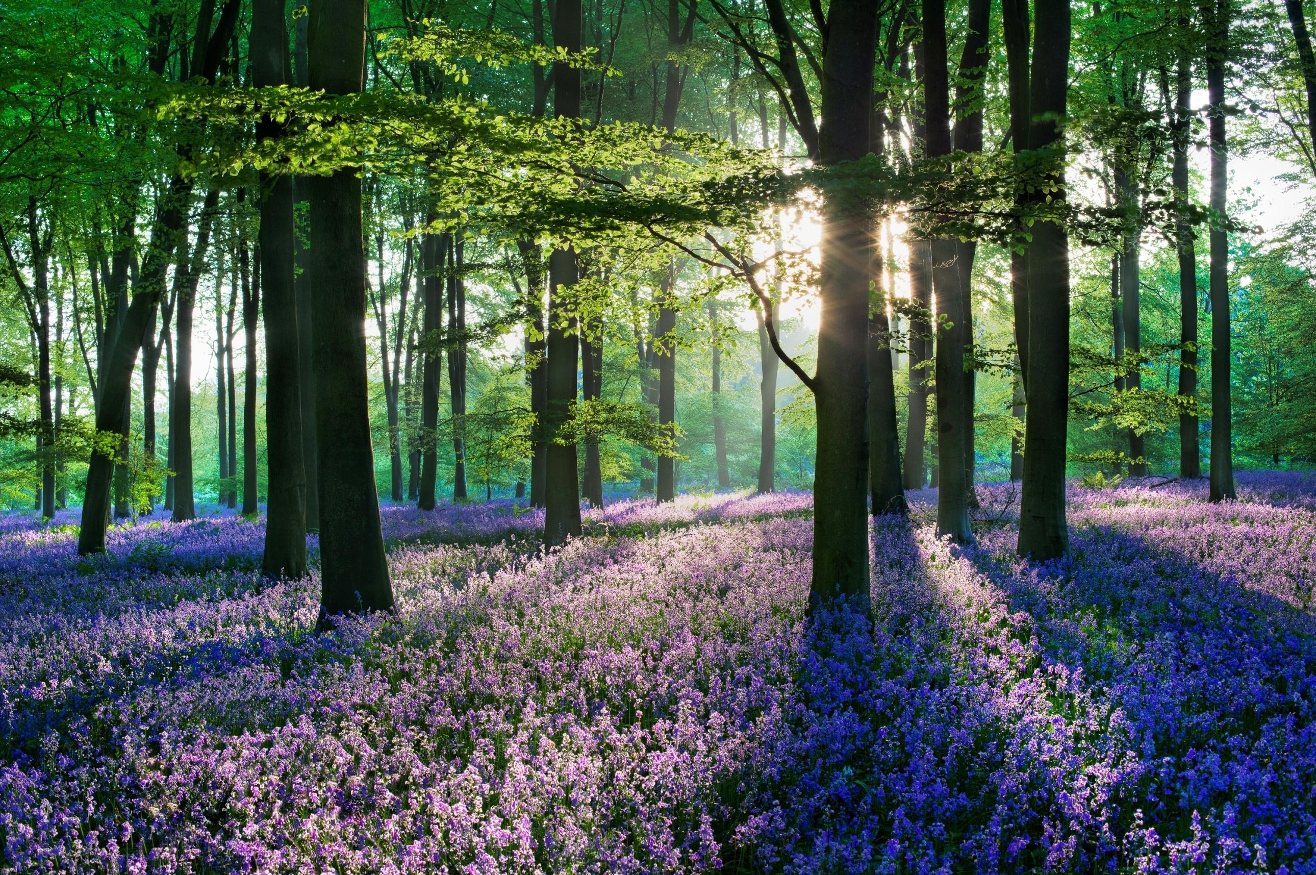 поле природа цветы дом фокус лес дервья скачать