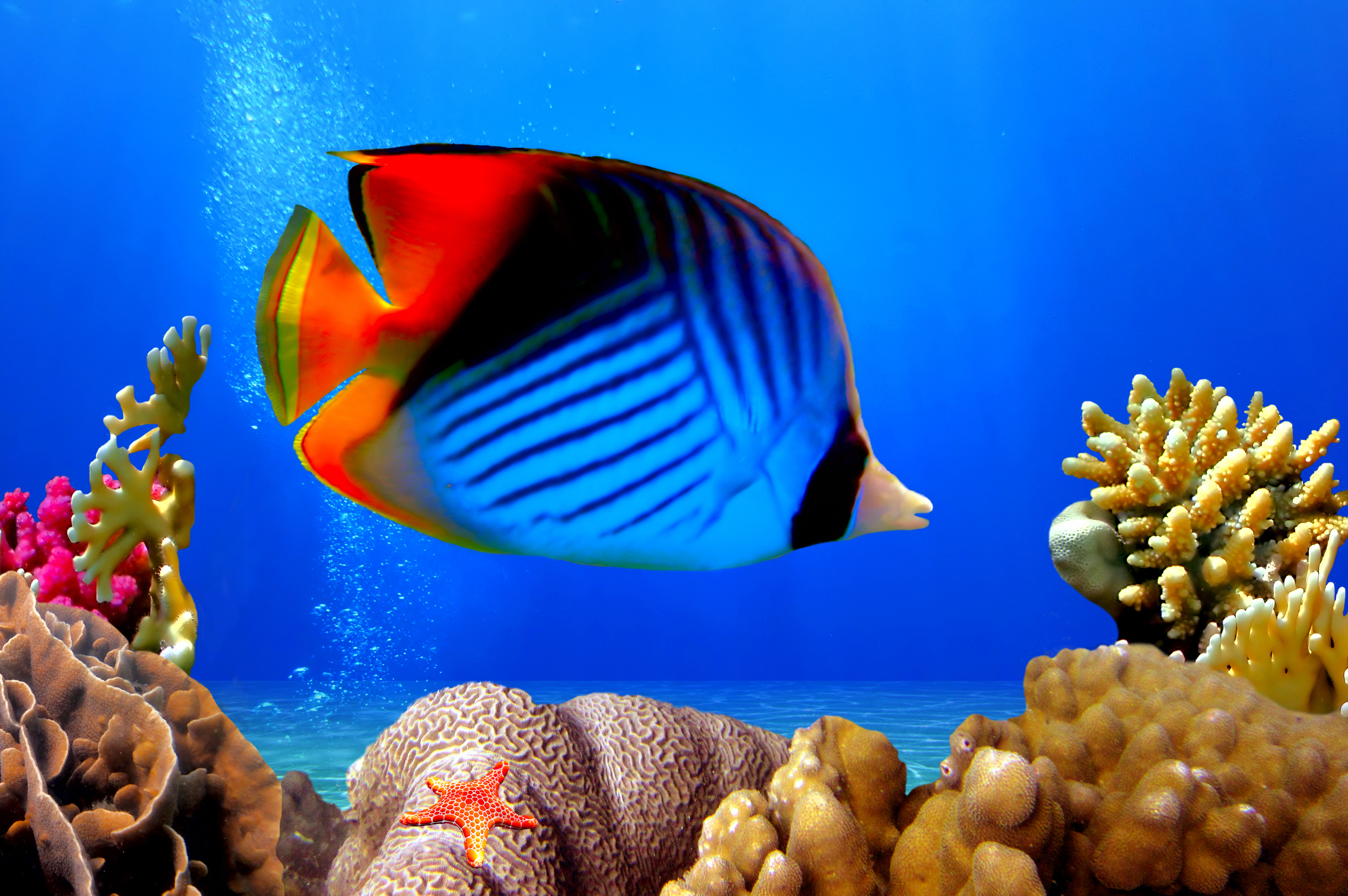 the factors that play an important role in fish production in coral reefs Start studying 2nd semester study notes marine science coral reefs are important because all of the factors below play a role in creating ocean currents.