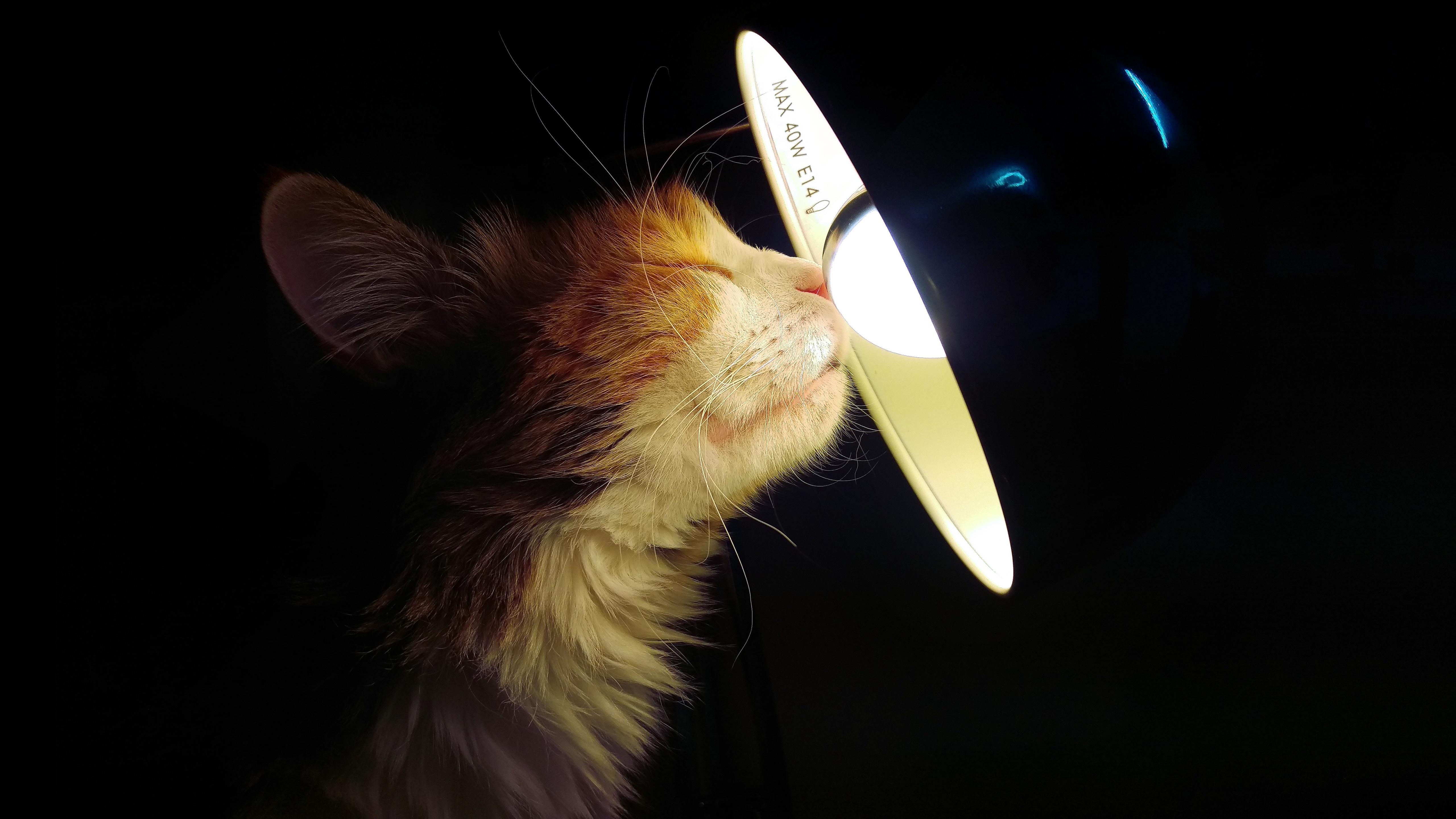 Фото кот лампа накаливания Лампа Морда Животные 5120x2880 коты кошка Кошки Лампочка ламп лампы морды животное