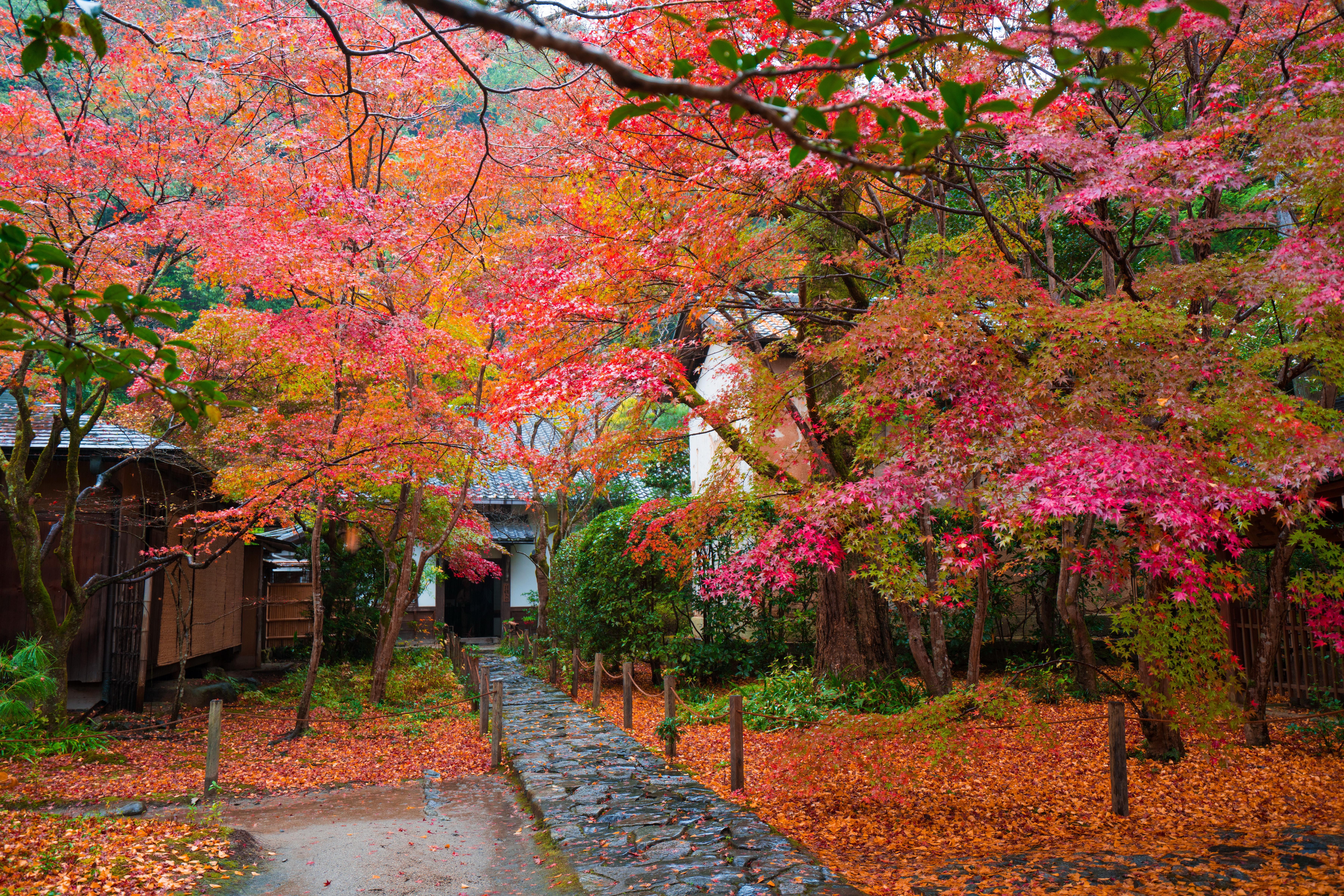 Картинки природа осень листва на деревьях