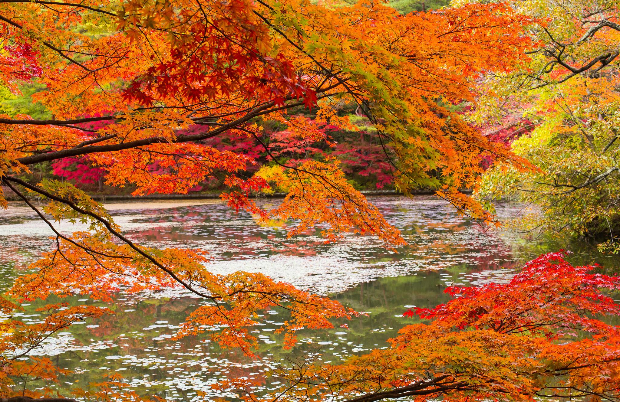 природа река листья осень лес деревья загрузить