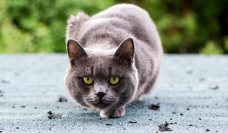 Серенькие кота загрузить