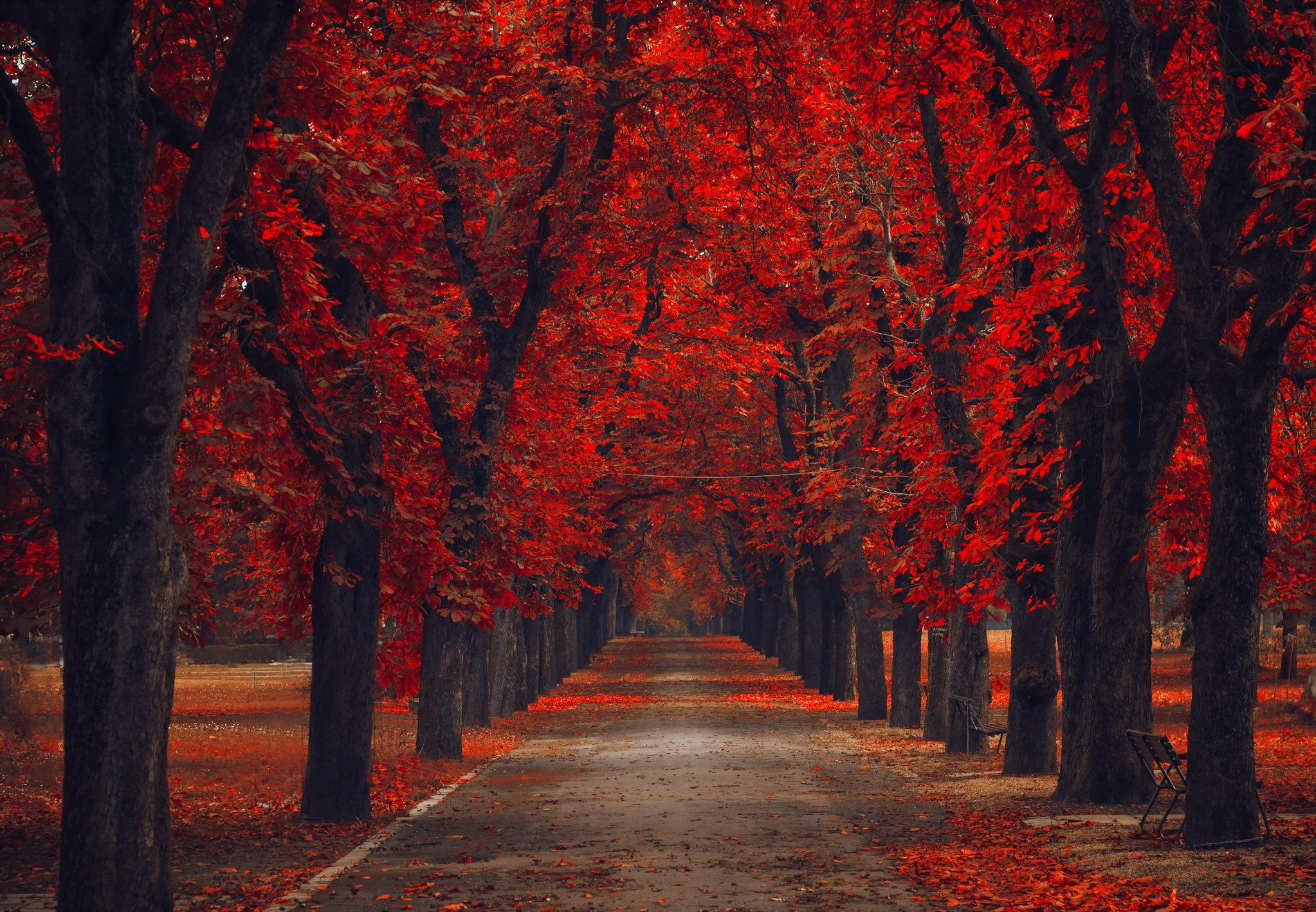 аллея из осенних деревьев без смс