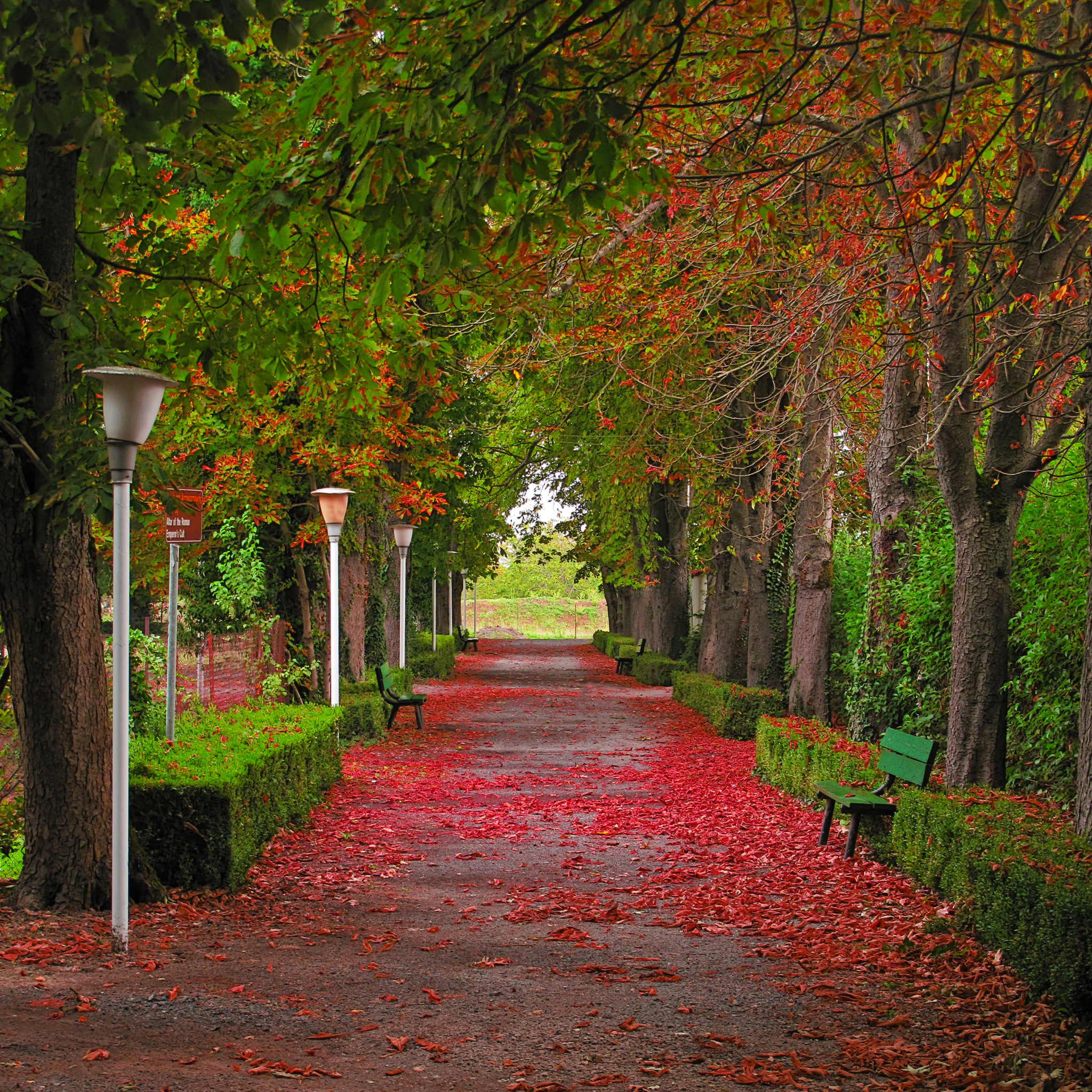 Осень лес парк фонарь листья бесплатно