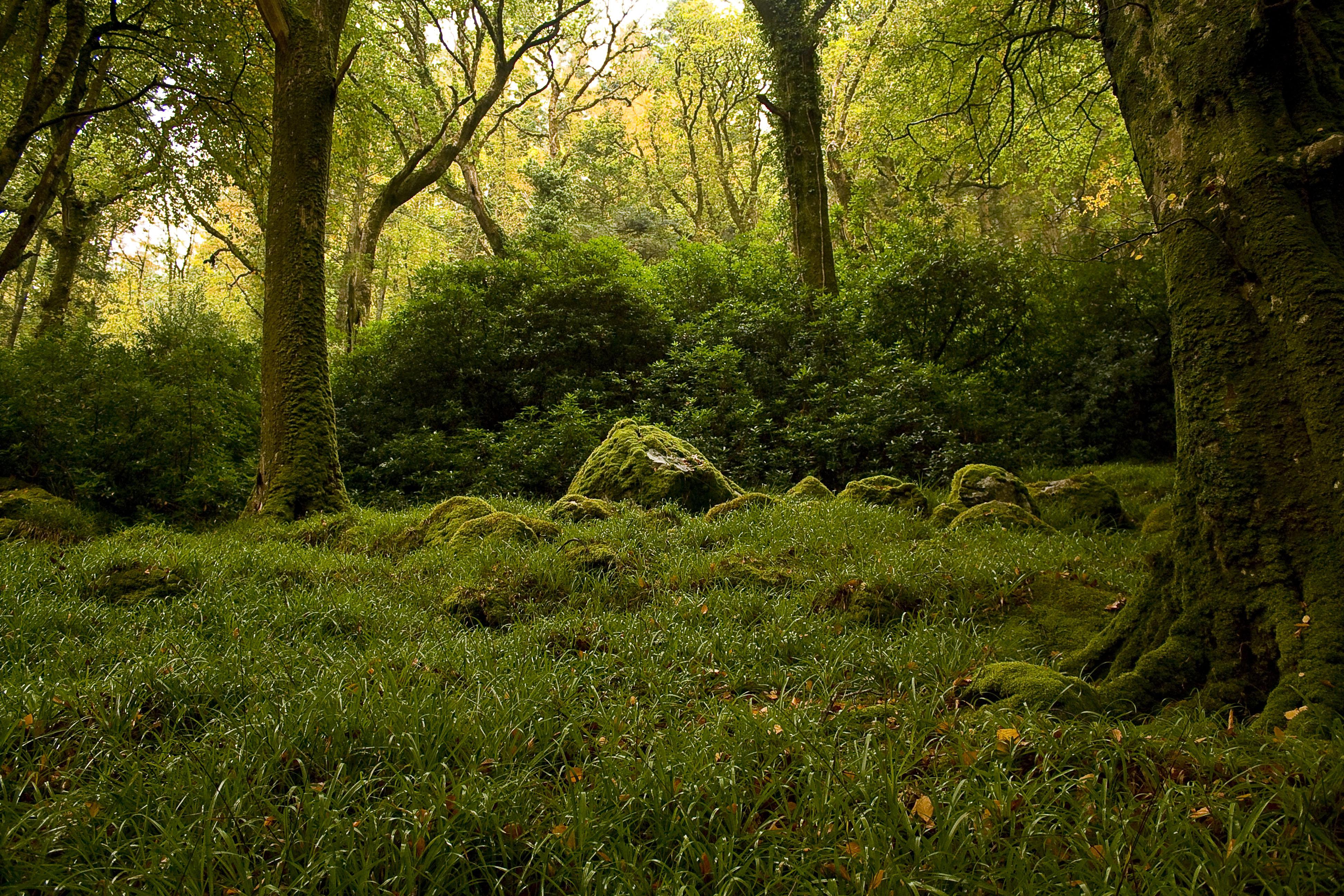 природа мох лестница трава деревья без смс