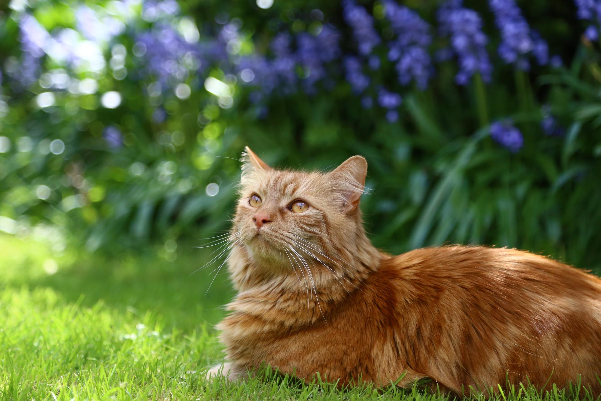 Кот в саду без смс