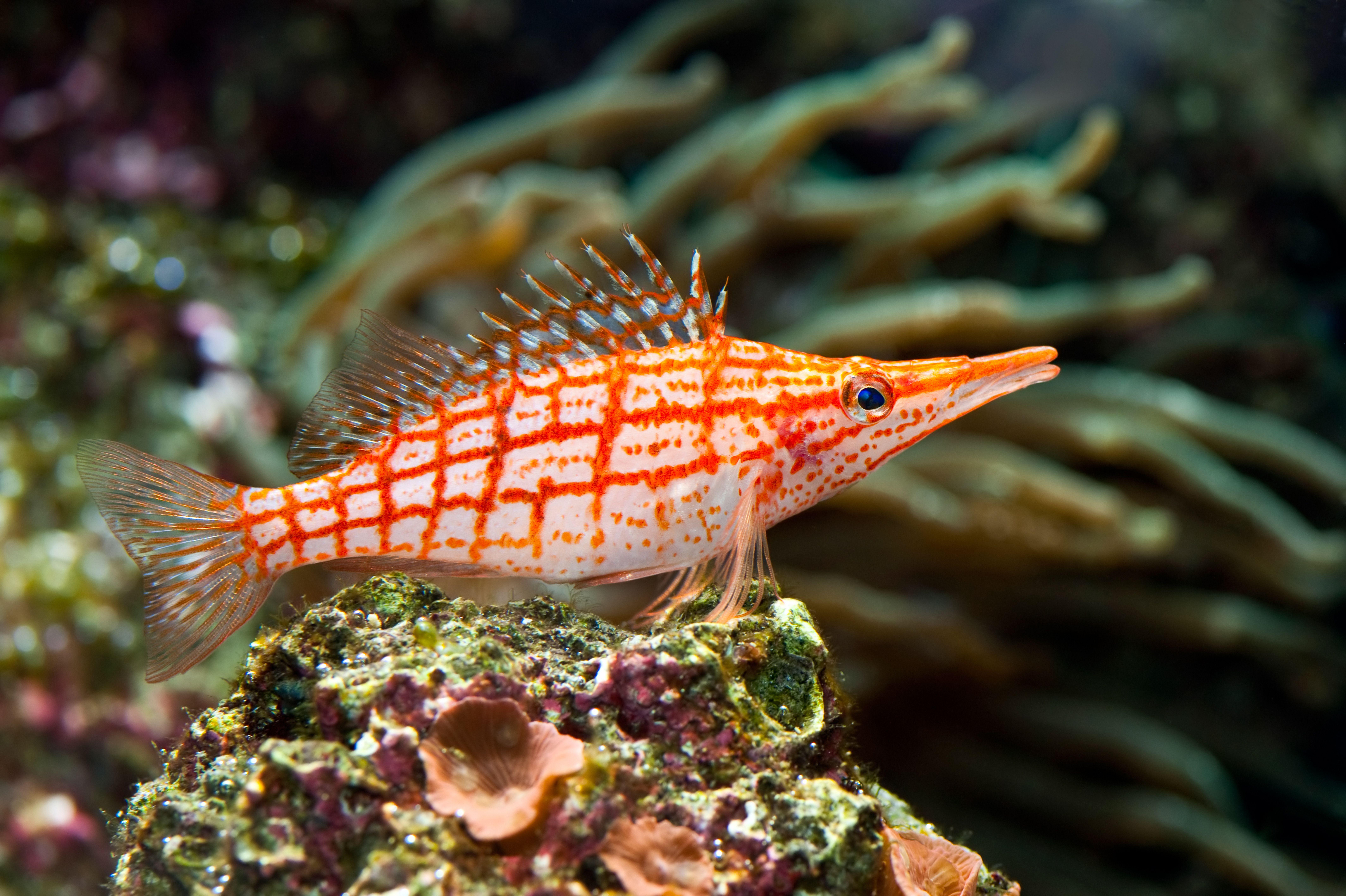 Обои для рабочего стола Рыбы Подводный мир marine fish Животные 8512x5664 животное