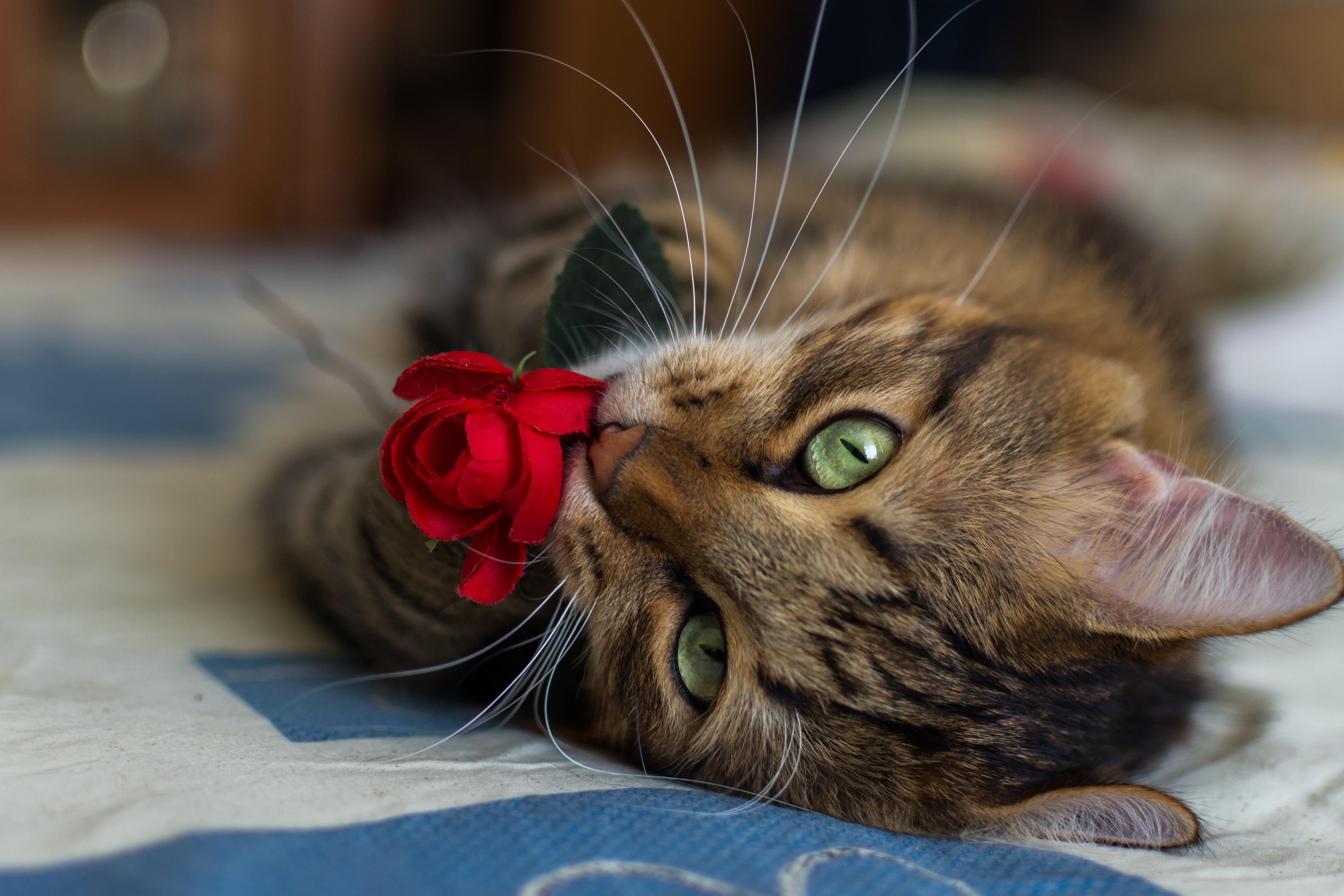 котята сирень умиление бесплатно