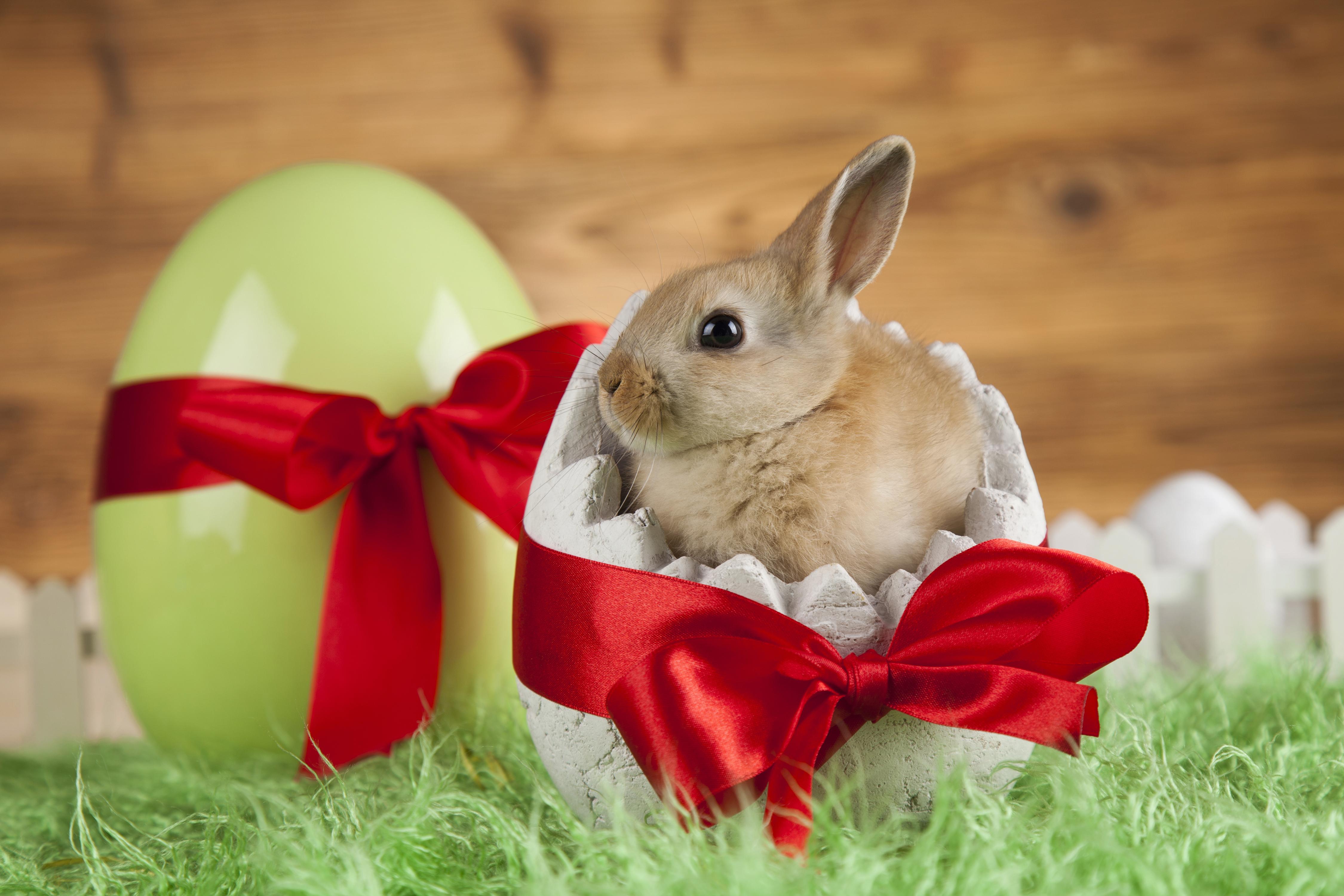 Картинки Пасха Кролики Детеныши Яйца Бантик животное 4500x3000 яиц яйцо яйцами бант бантики Животные
