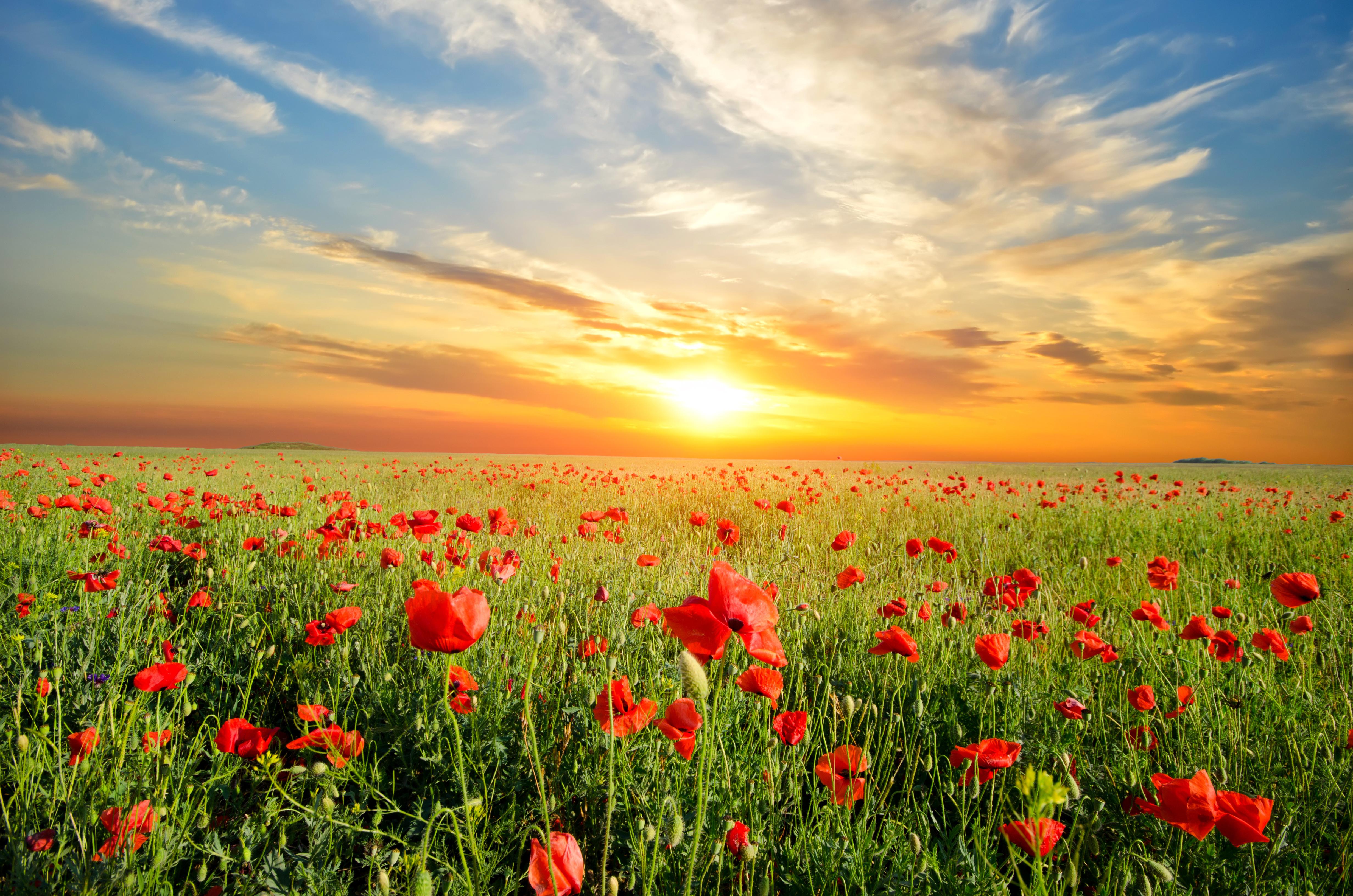 цветочная поляна небо закат без смс