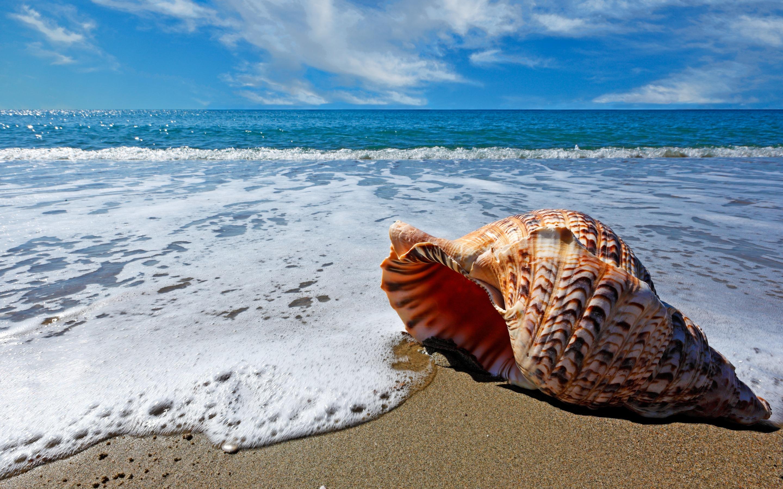 Ракушка на берегу море загрузить