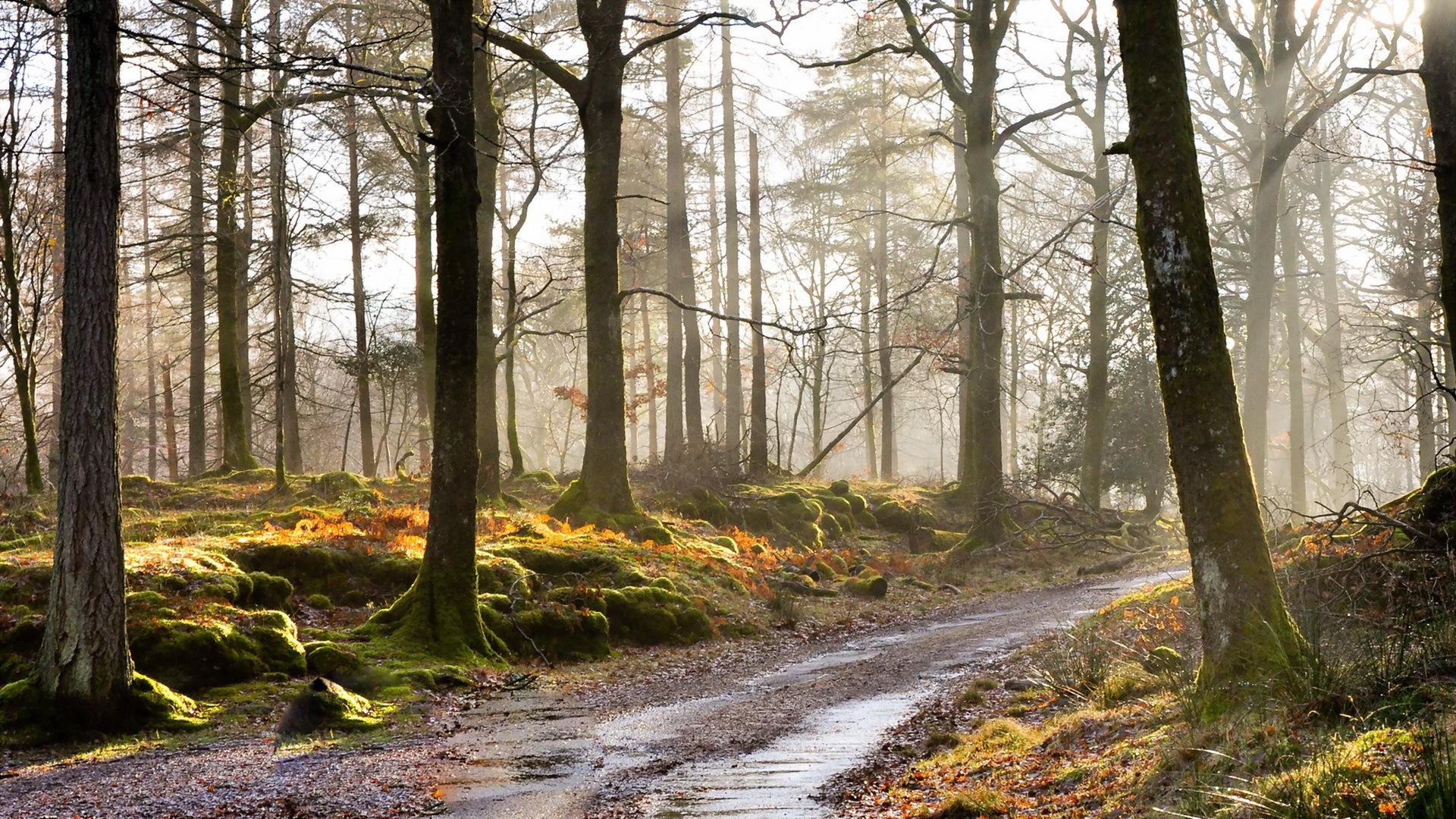дорога лес road forest подборки