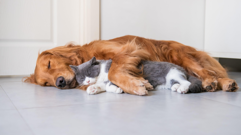 Обои для рабочего стола кот собака Лежит Двое спят животное 5760x3240 коты кошка Кошки Собаки лежа лежат лежачие 2 два две сон Спит вдвоем спящий Животные