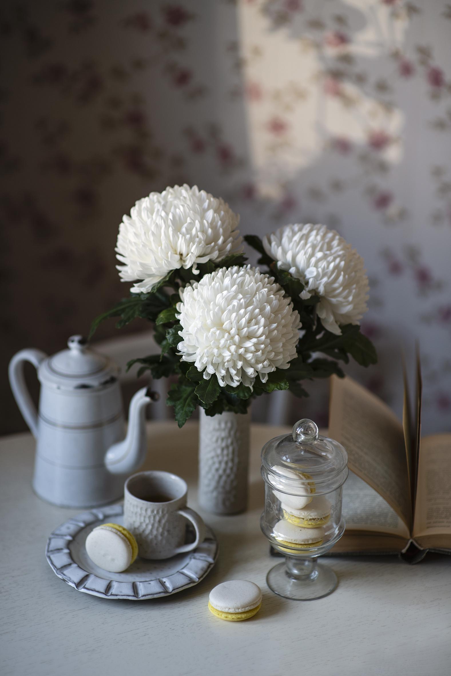 Фото Макарон белые цветок Чайник Хризантемы Еда Чашка Натюрморт  для мобильного телефона белая Белый белых Цветы Пища чашке Продукты питания