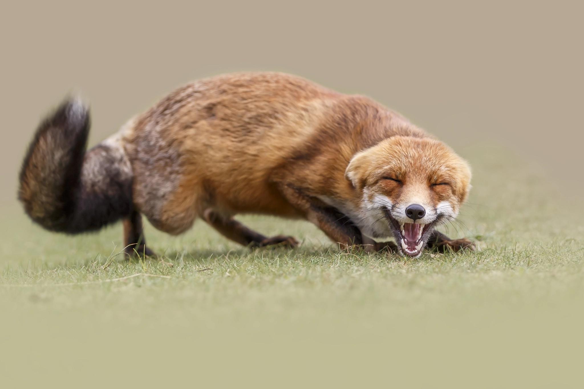 Фотографии Лисы милый Животные Лисица милая Милые Миленькие животное