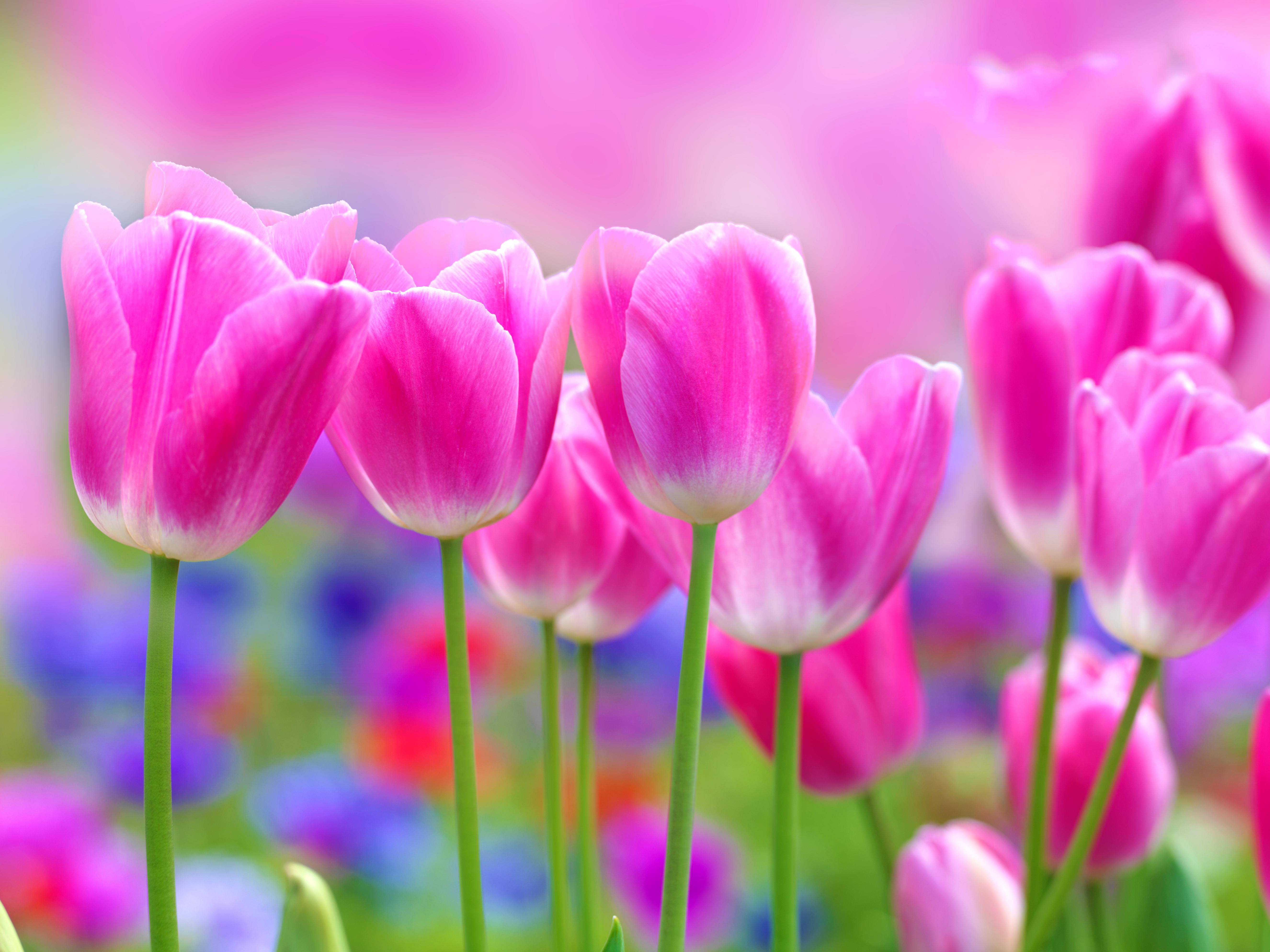 Blumiges Design mit Liebe verpackt  GRACE Flowerbox