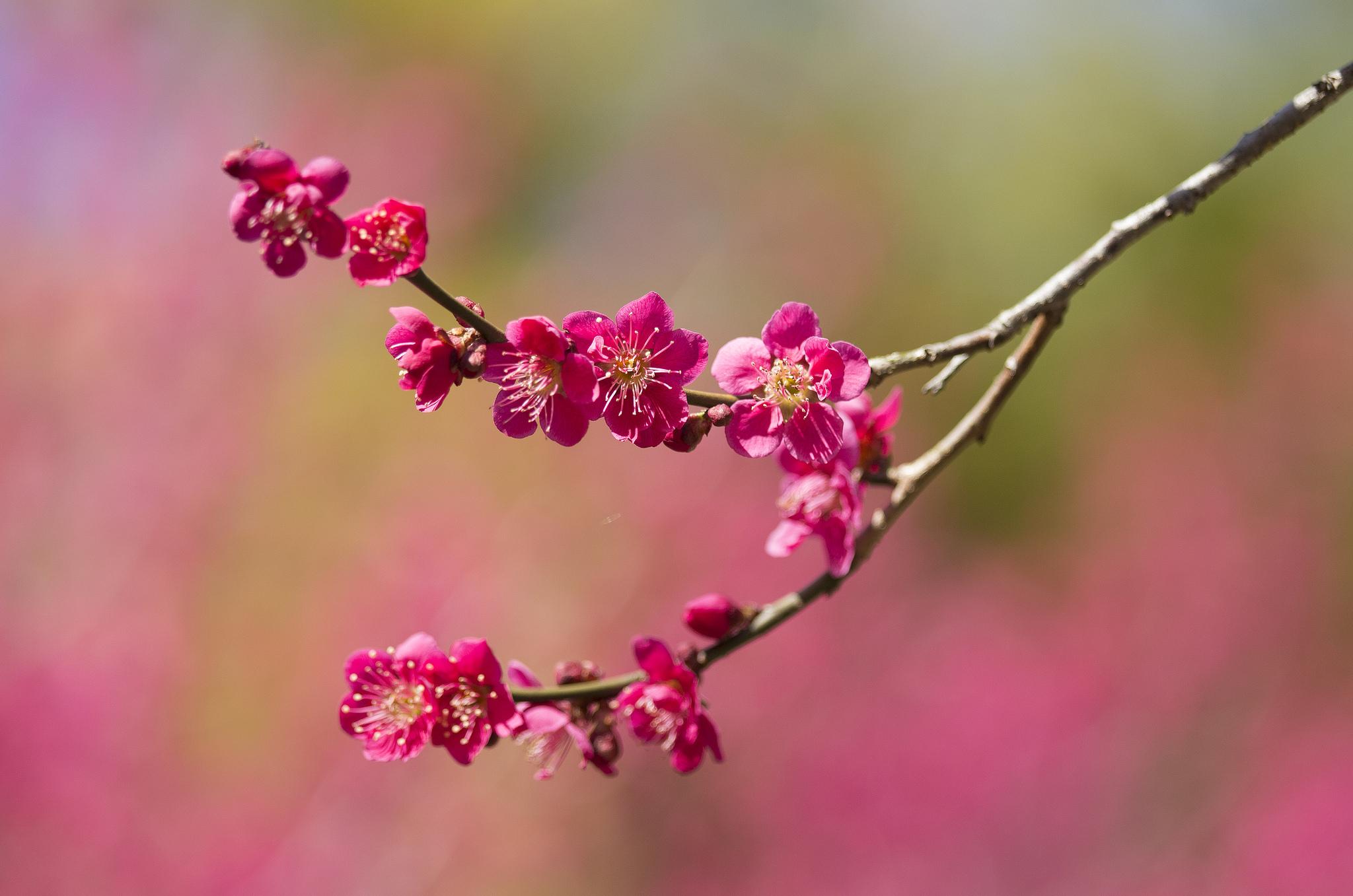 цветение почки весна бесплатно