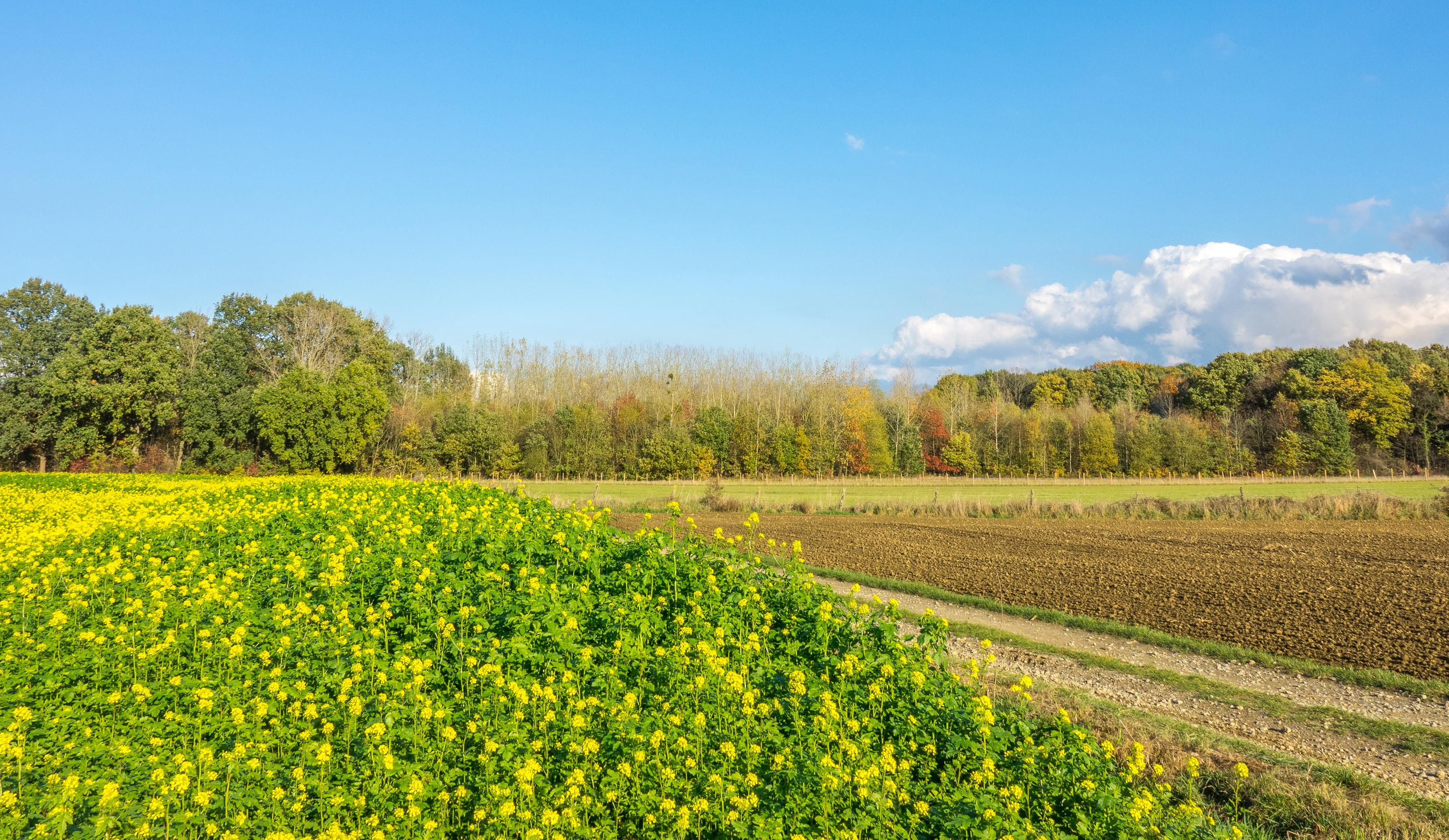 Фотография Бельгия Houwaart Vlaams Brabant Природа весенние Поля 3450x2000 Весна