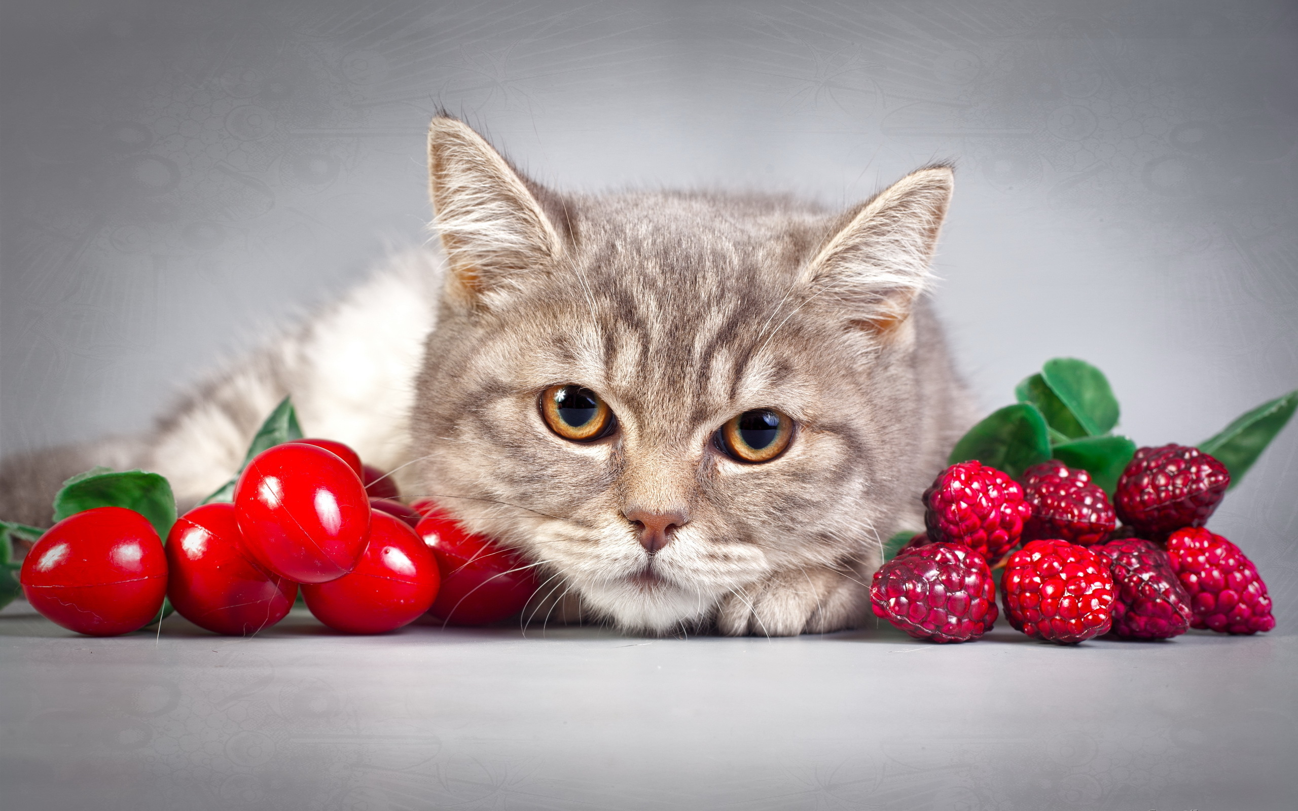 котята сирень умиление загрузить