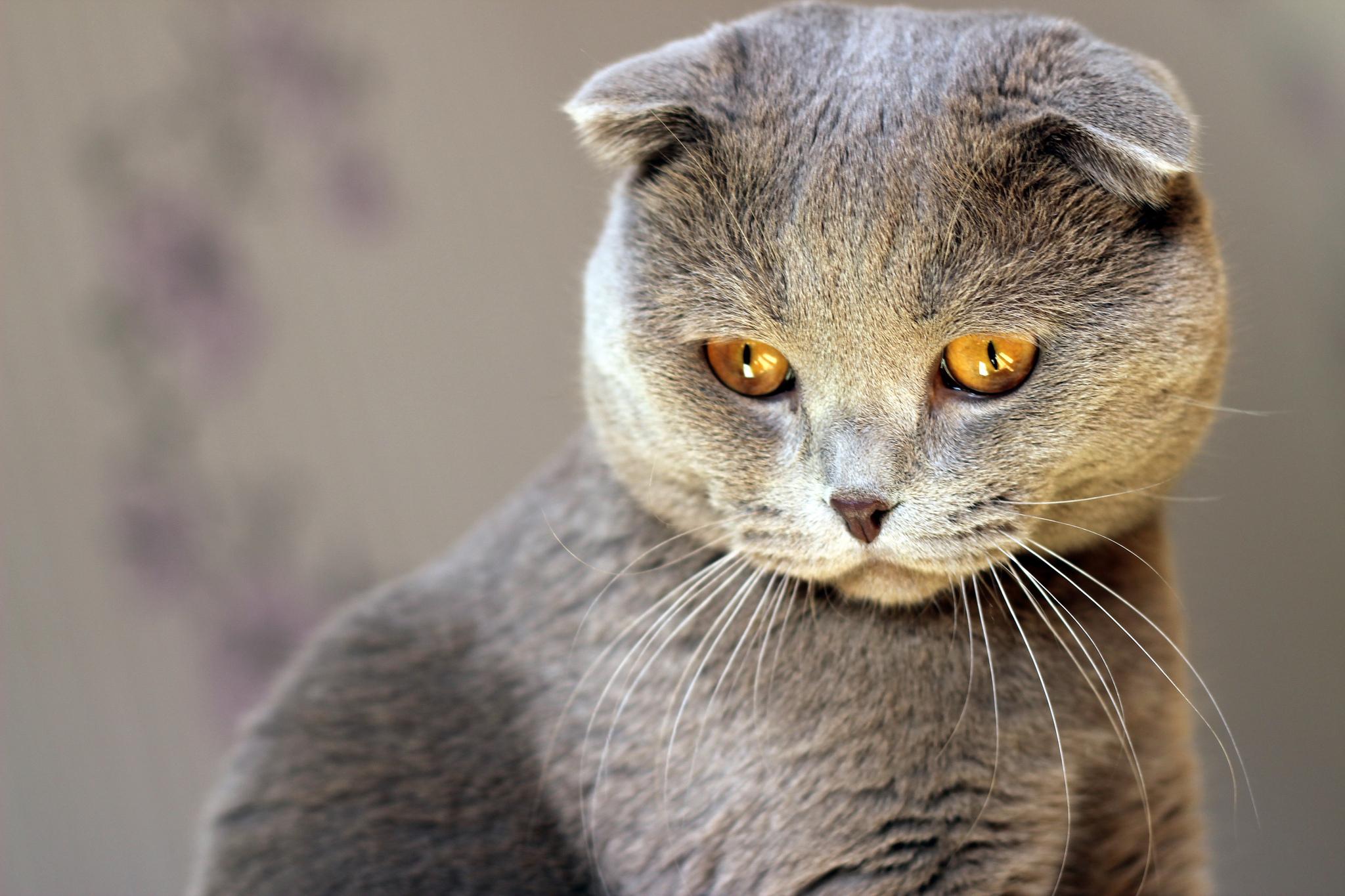 Серенькие кота скачать