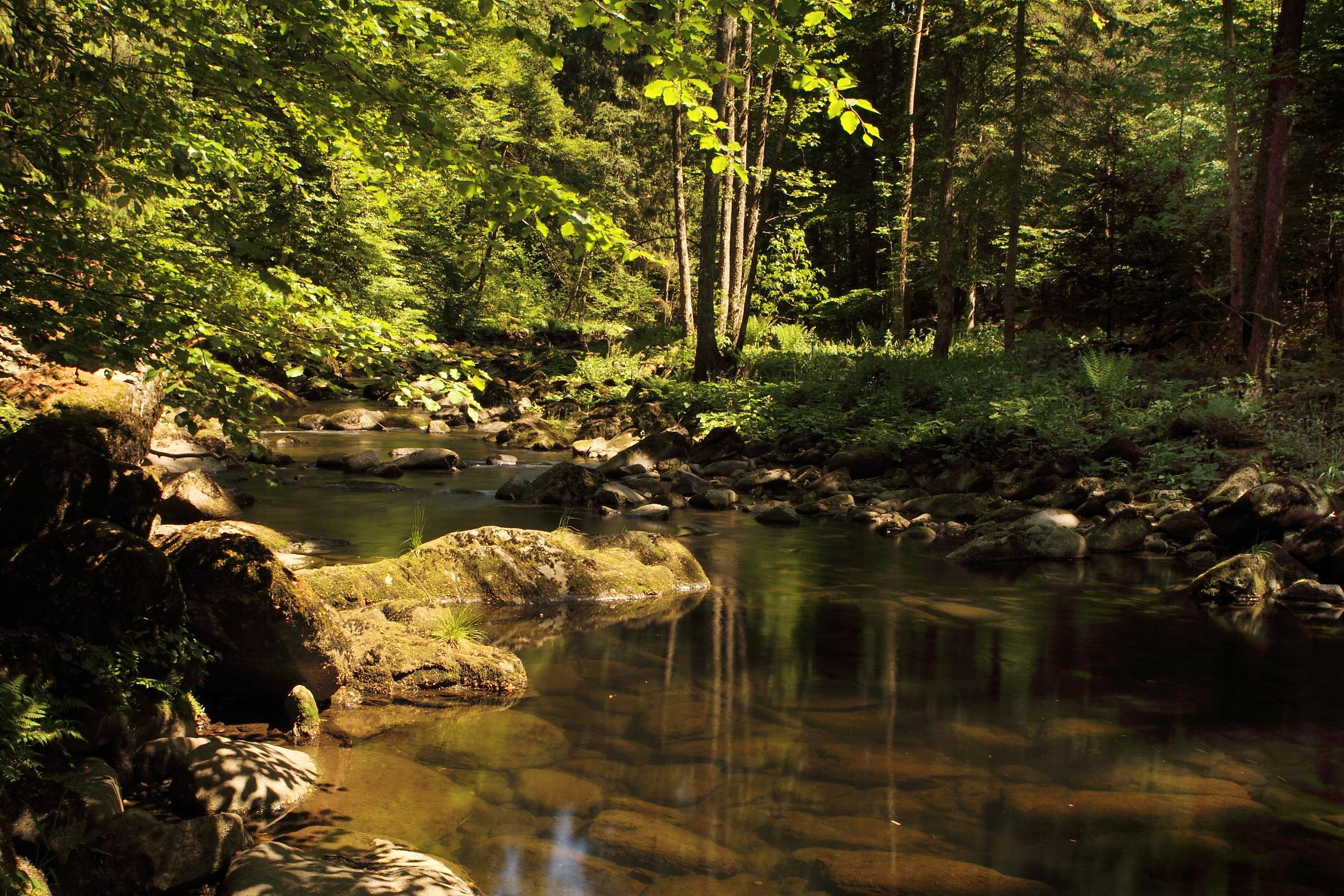 Река текущая по камням без смс