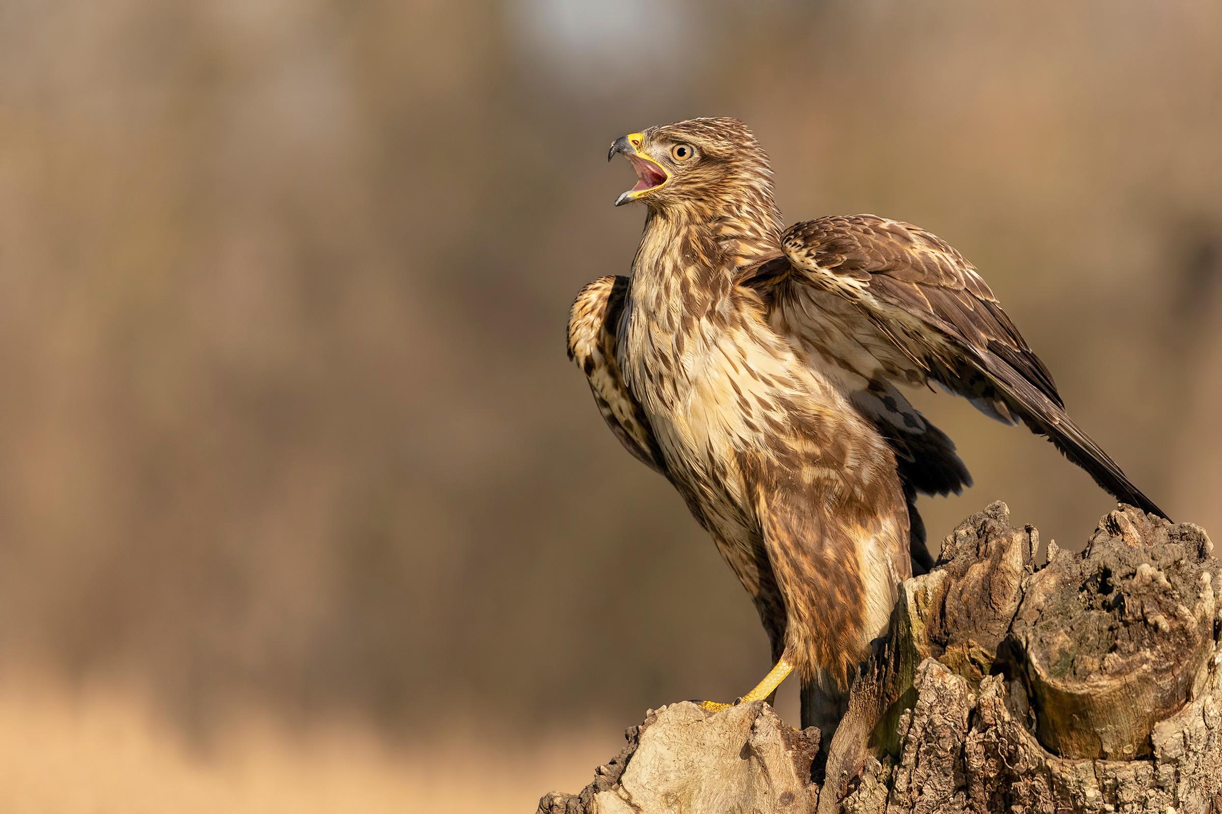 Картинки птица Размытый фон пне Животные Птицы боке Пень животное