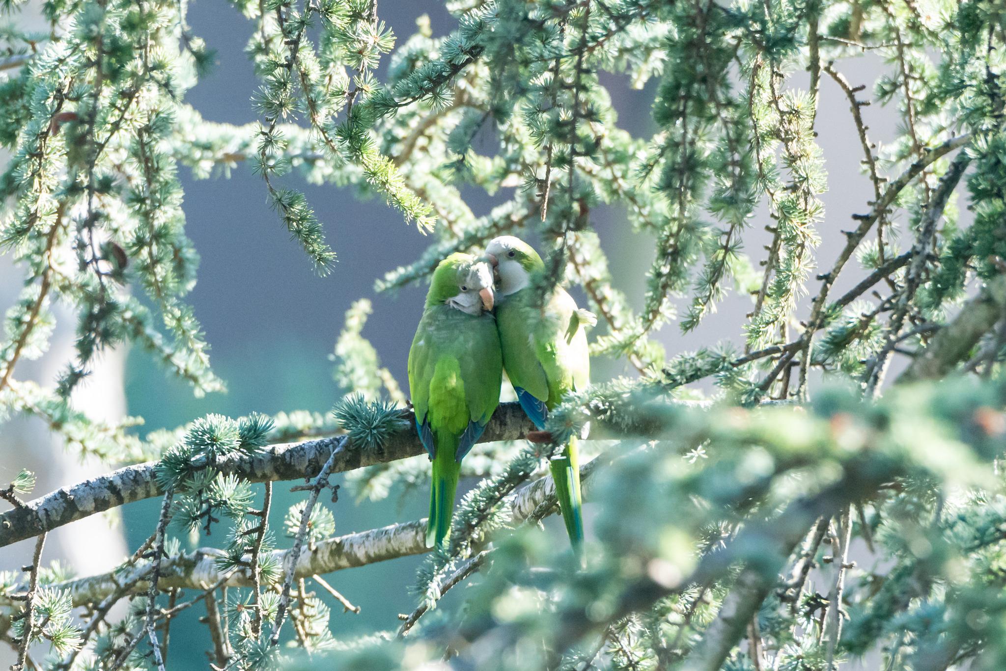 попугай на ветке загрузить