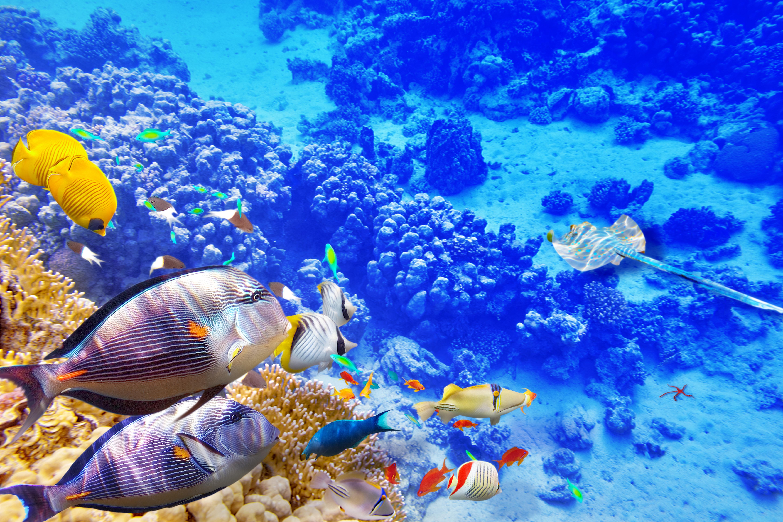 природа рыба море коралловый риф скачать