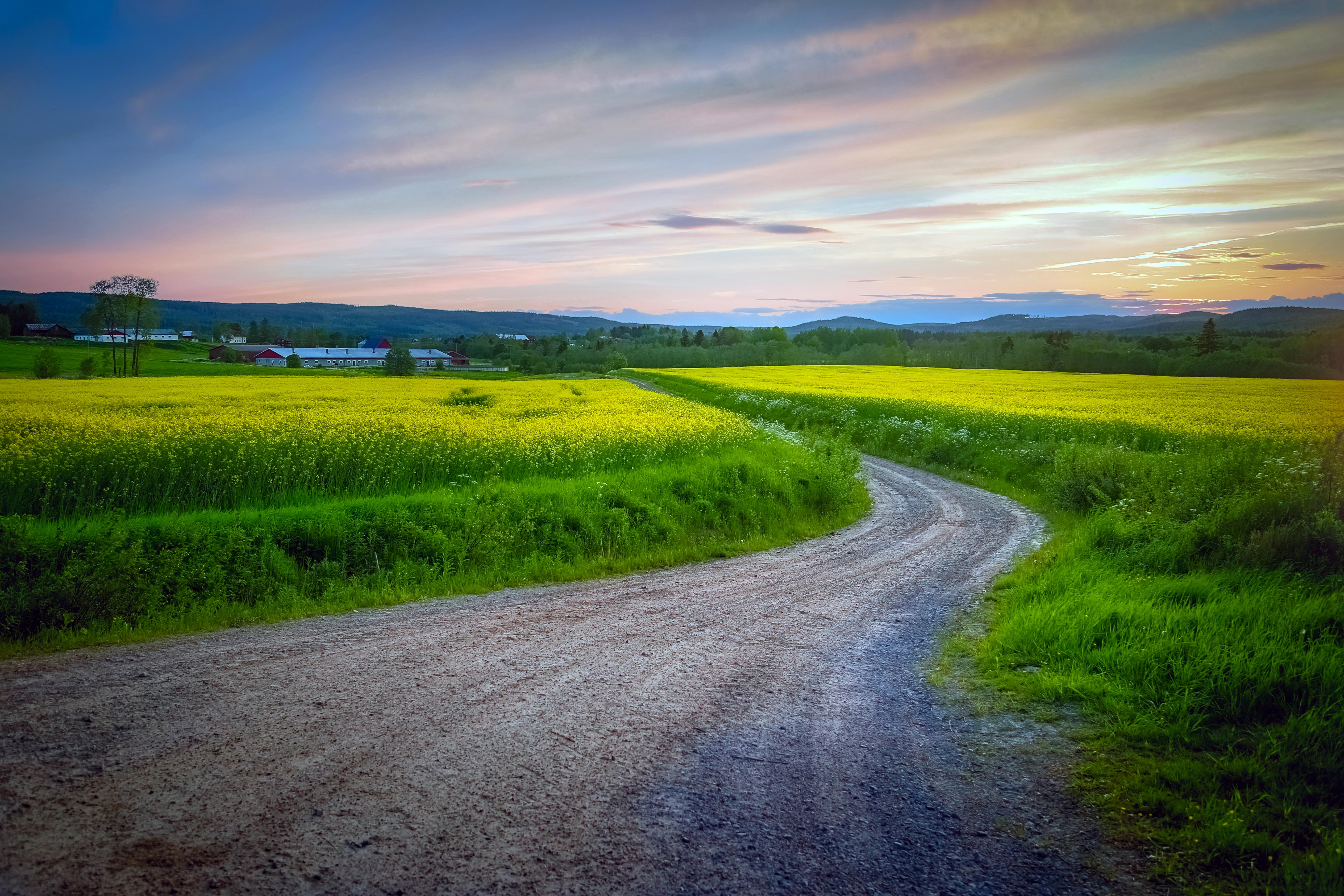 Дорога вдоль олеи меж полями бесплатно