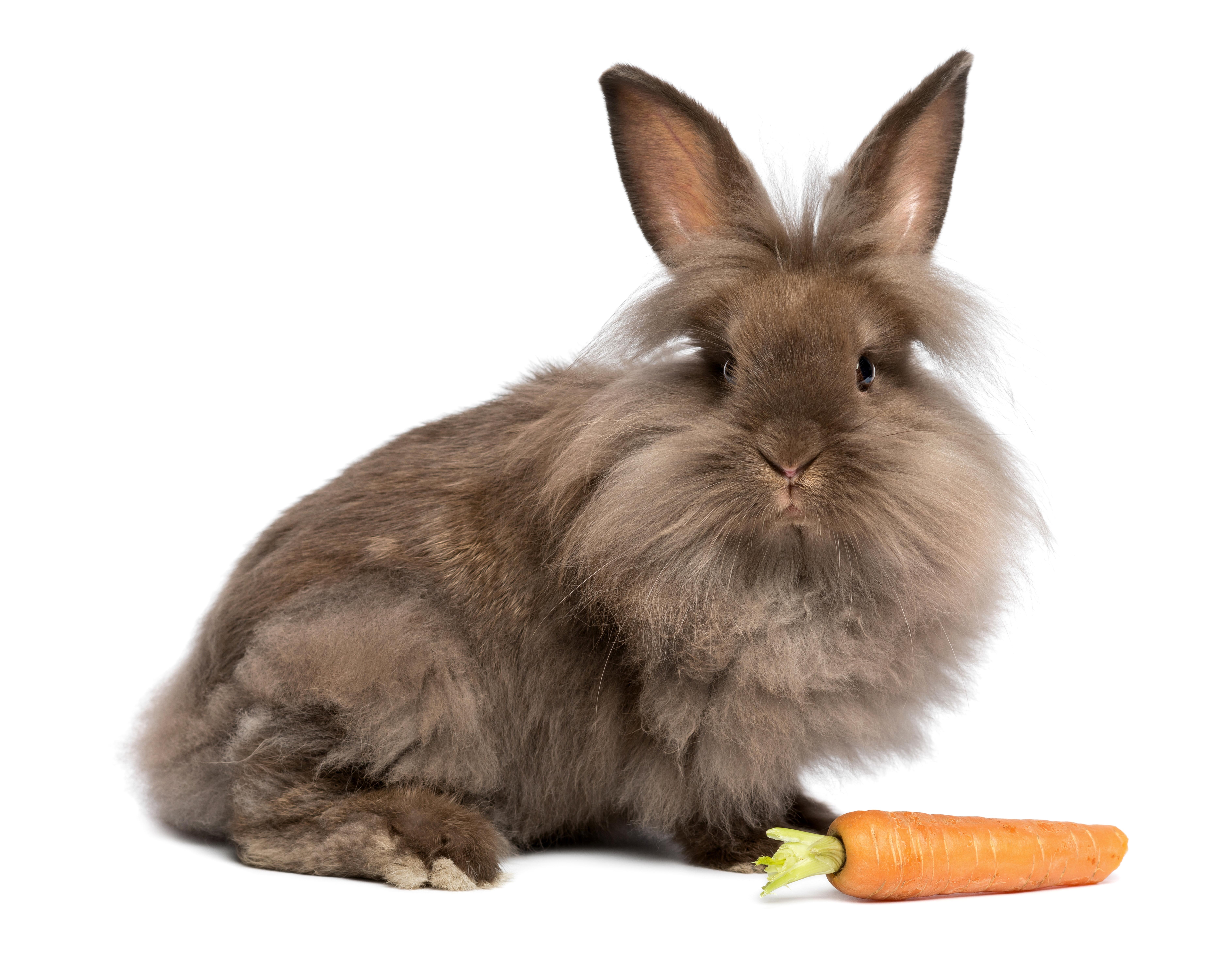 Кролик, морковка, собака загрузить